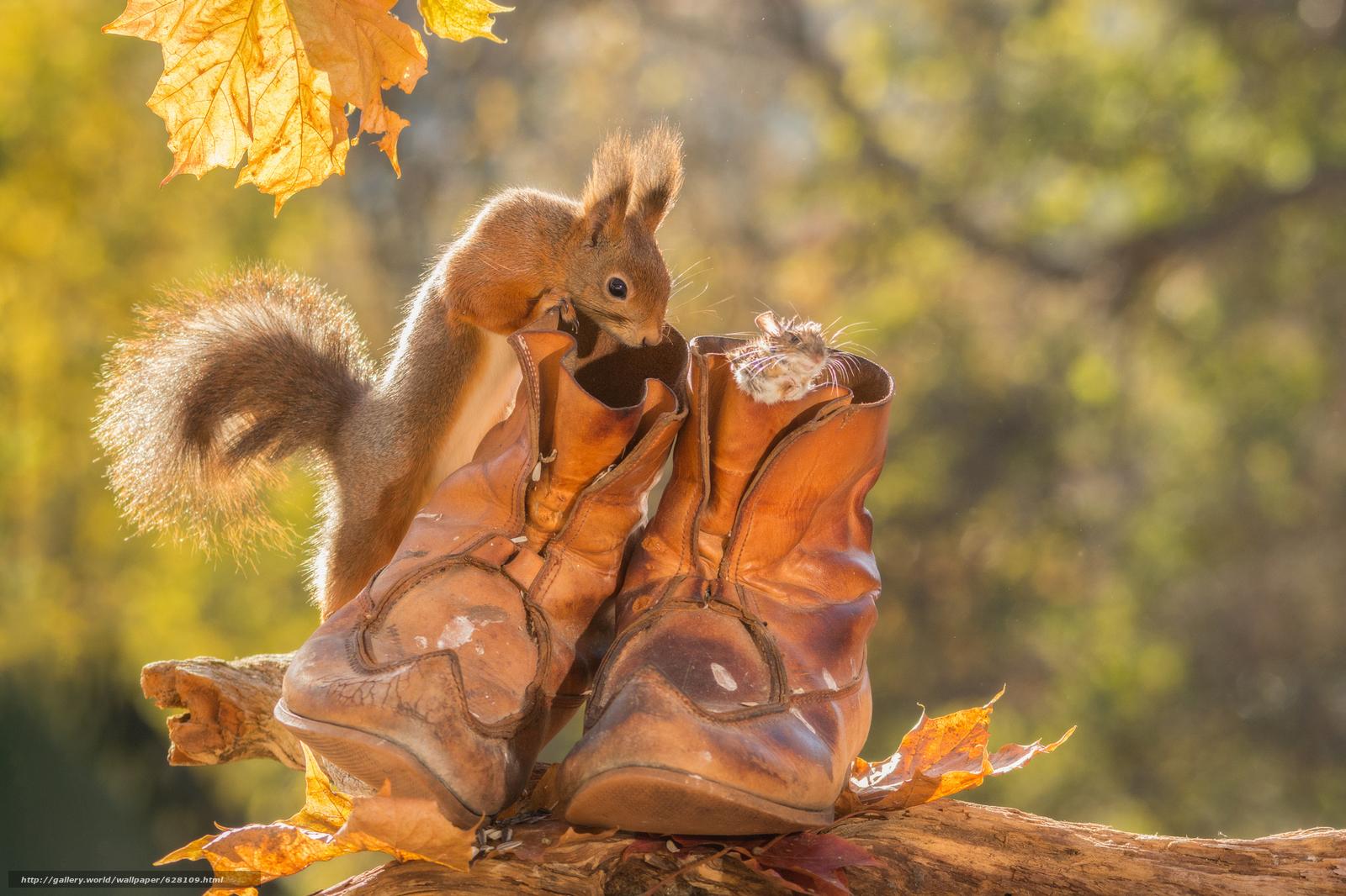 scaricare gli sfondi scoiattolo,  topo,  topo,  scarponi Sfondi gratis per la risoluzione del desktop 2048x1365 — immagine №628109