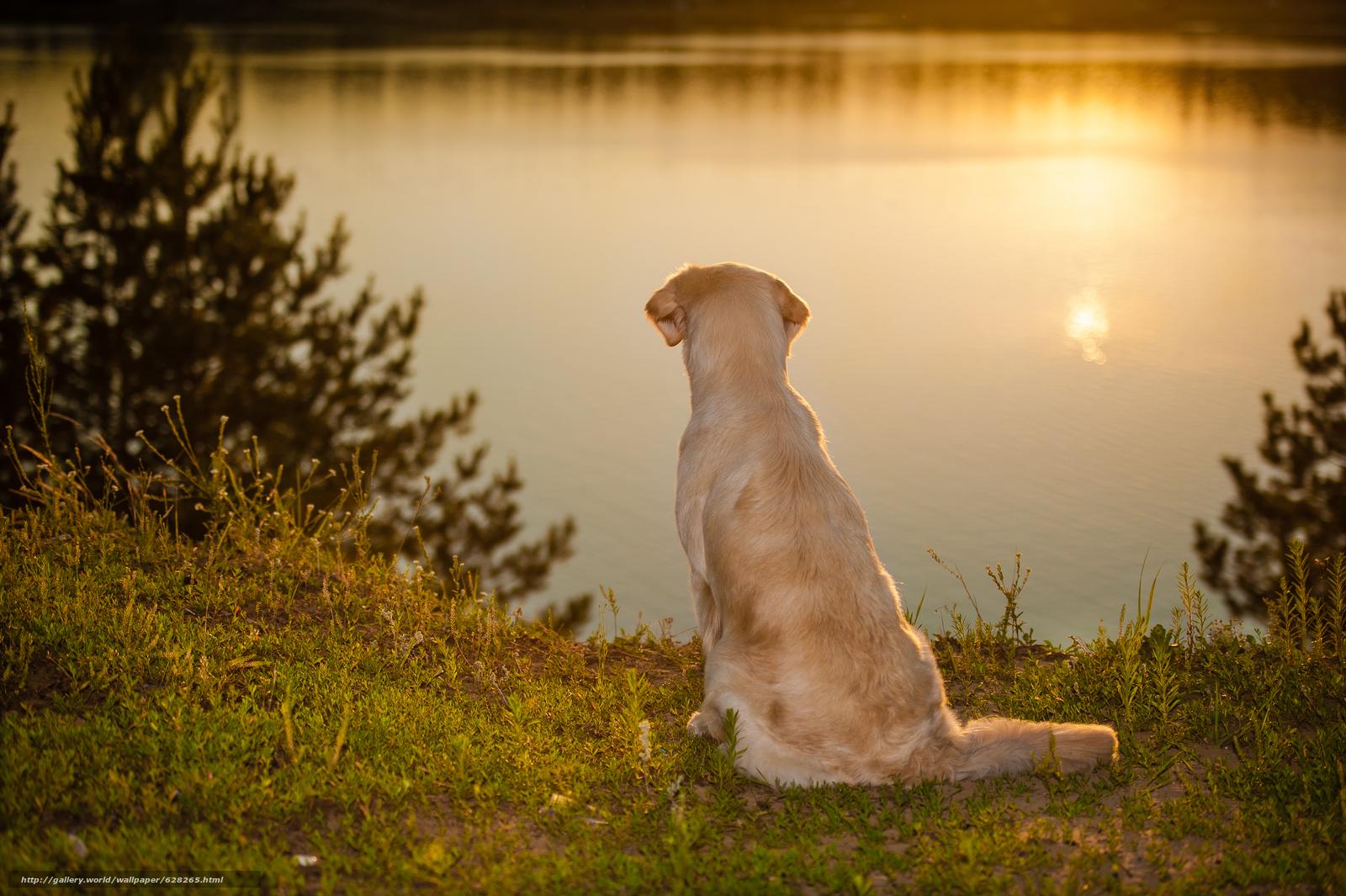 Скачать обои собака,  вода,  настроение бесплатно для рабочего стола в разрешении 8512x5664 — картинка №628265