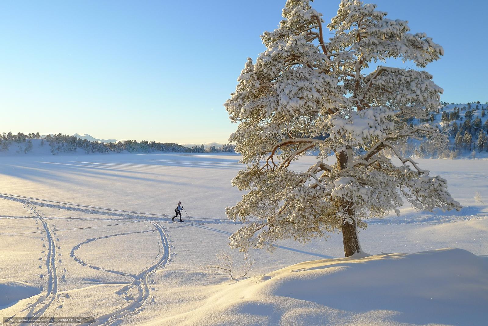 Tlcharger Fond d'ecran hiver,  arbre solitaire,  skieur,  paysage Fonds d'ecran gratuits pour votre rsolution du bureau 3776x2520 — image №630027