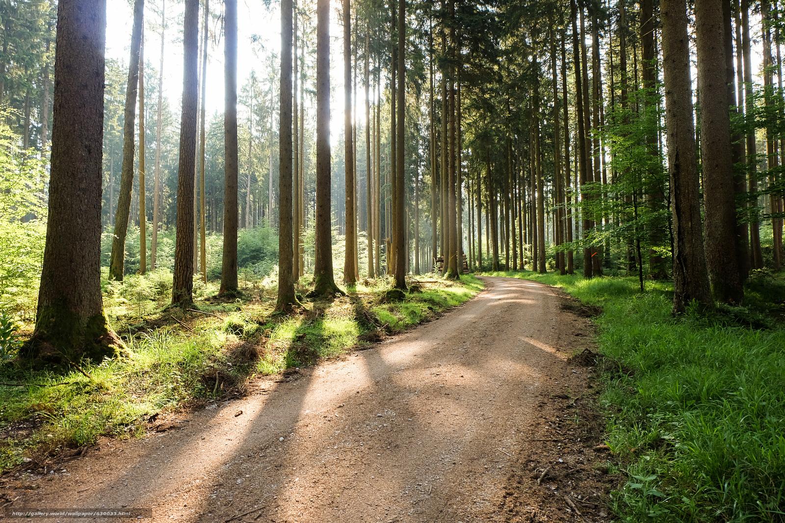 Descargar gratis bosque,  árboles,  carretera,  paisaje Fondos de escritorio en la resolucin 2400x1600 — imagen №630033