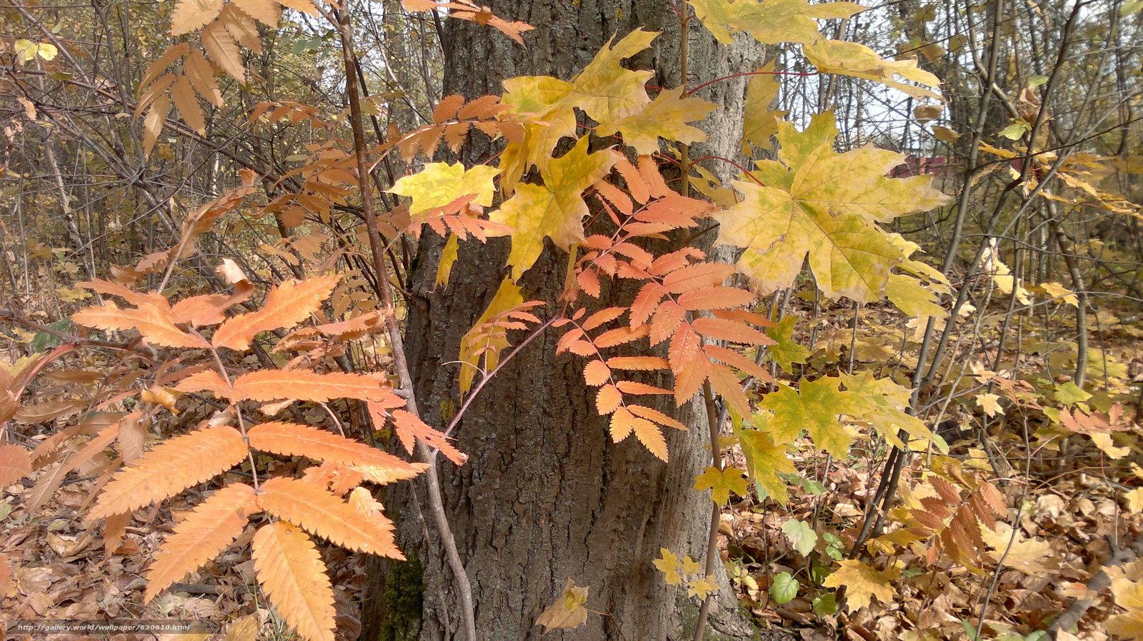 Скачать обои осень,  октябрь,  листья бесплатно для рабочего стола в разрешении 3264x1832 — картинка №630610