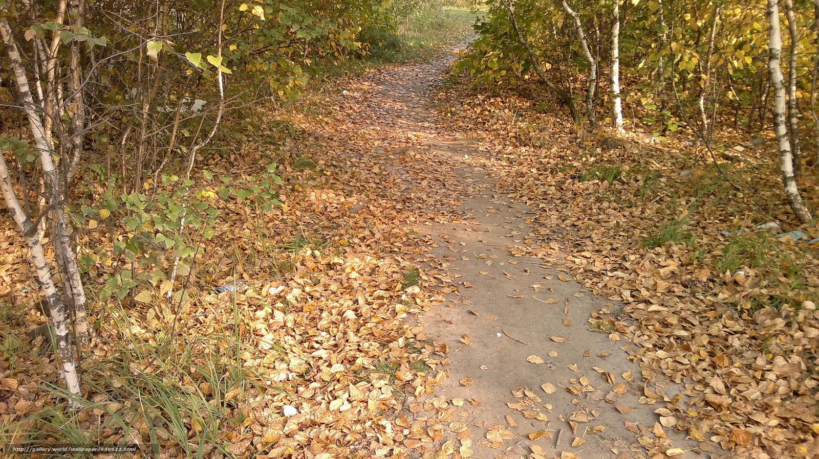Скачать обои осень,  тропинка,  опавшая листва бесплатно для рабочего стола в разрешении 3264x1832 — картинка №630612