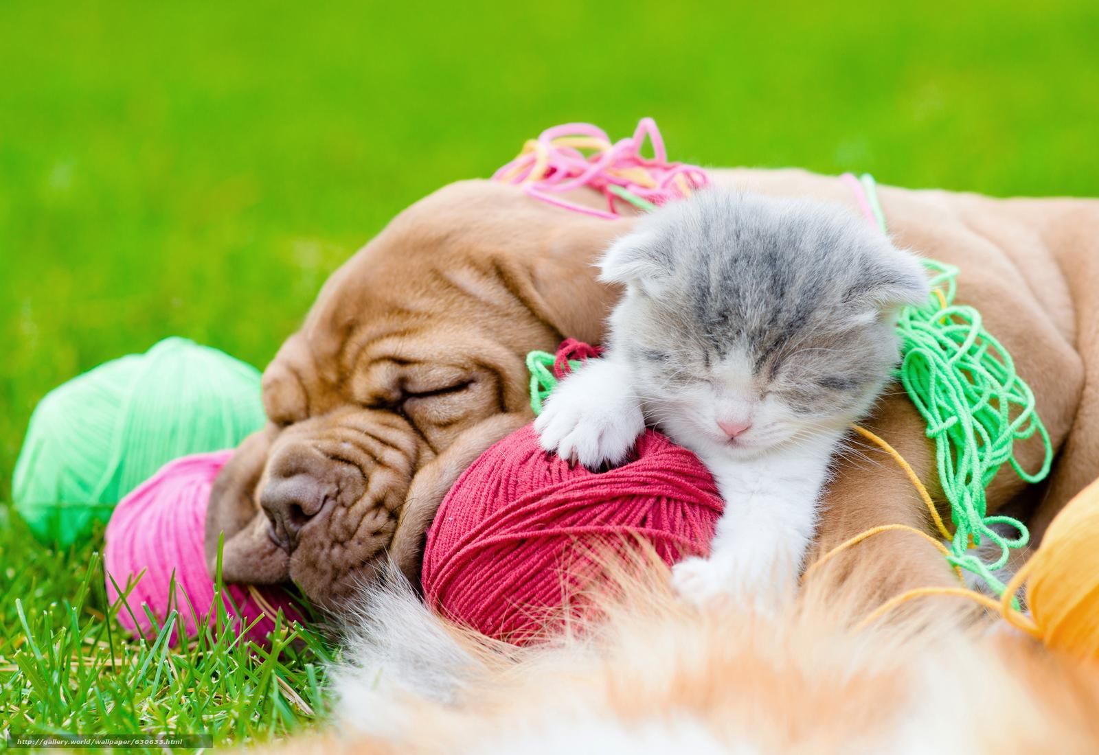 Tlcharger fond d 39 ecran chien chiot chaton amis fonds d for Fond ecran chiot