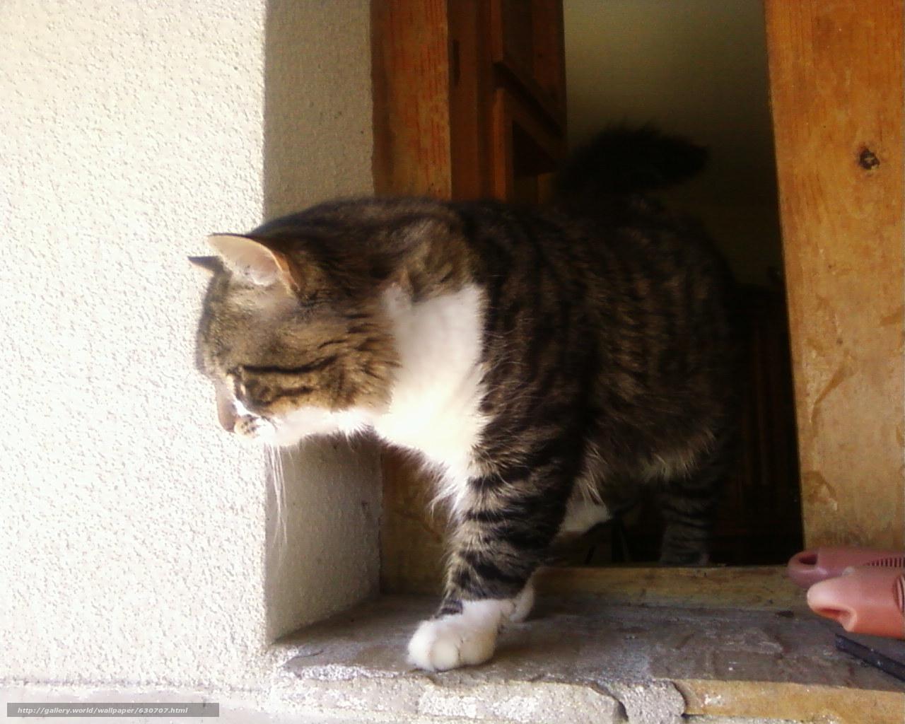 Download Hintergrund cat,  Muschi,  Notdurft Freie desktop Tapeten in der Auflosung 1280x1024 — bild №630707