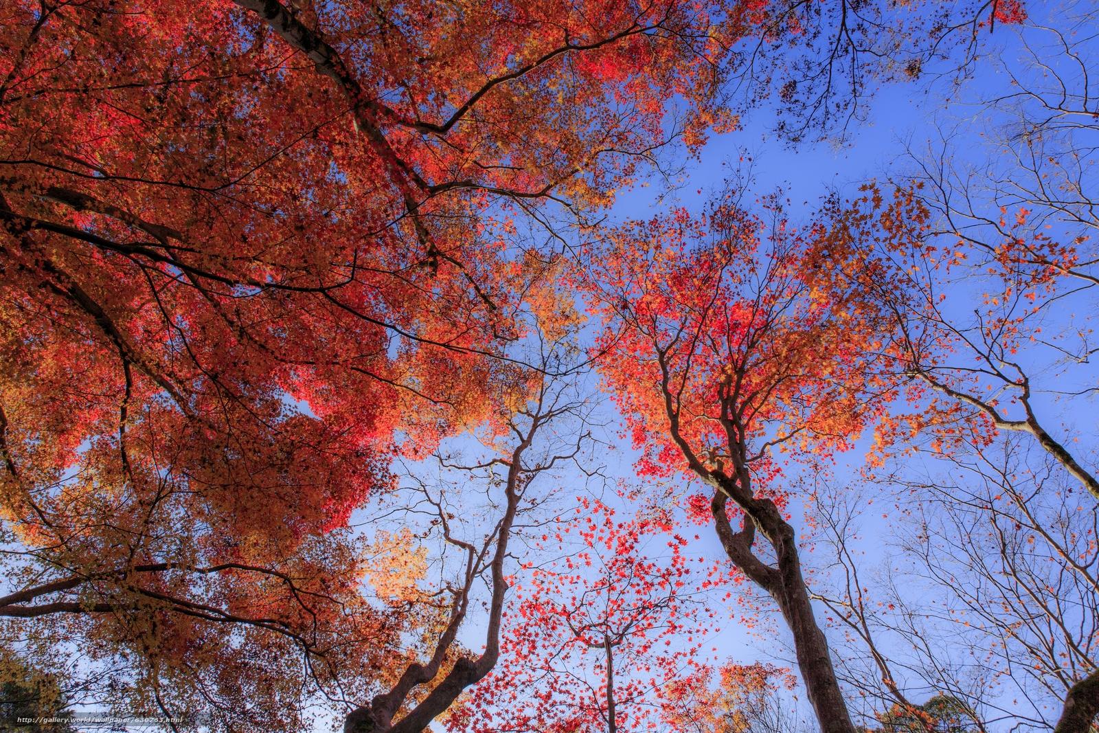 scaricare gli sfondi autunno,  alberi,  incoronare,  natura Sfondi gratis per la risoluzione del desktop 5760x3840 — immagine №630763
