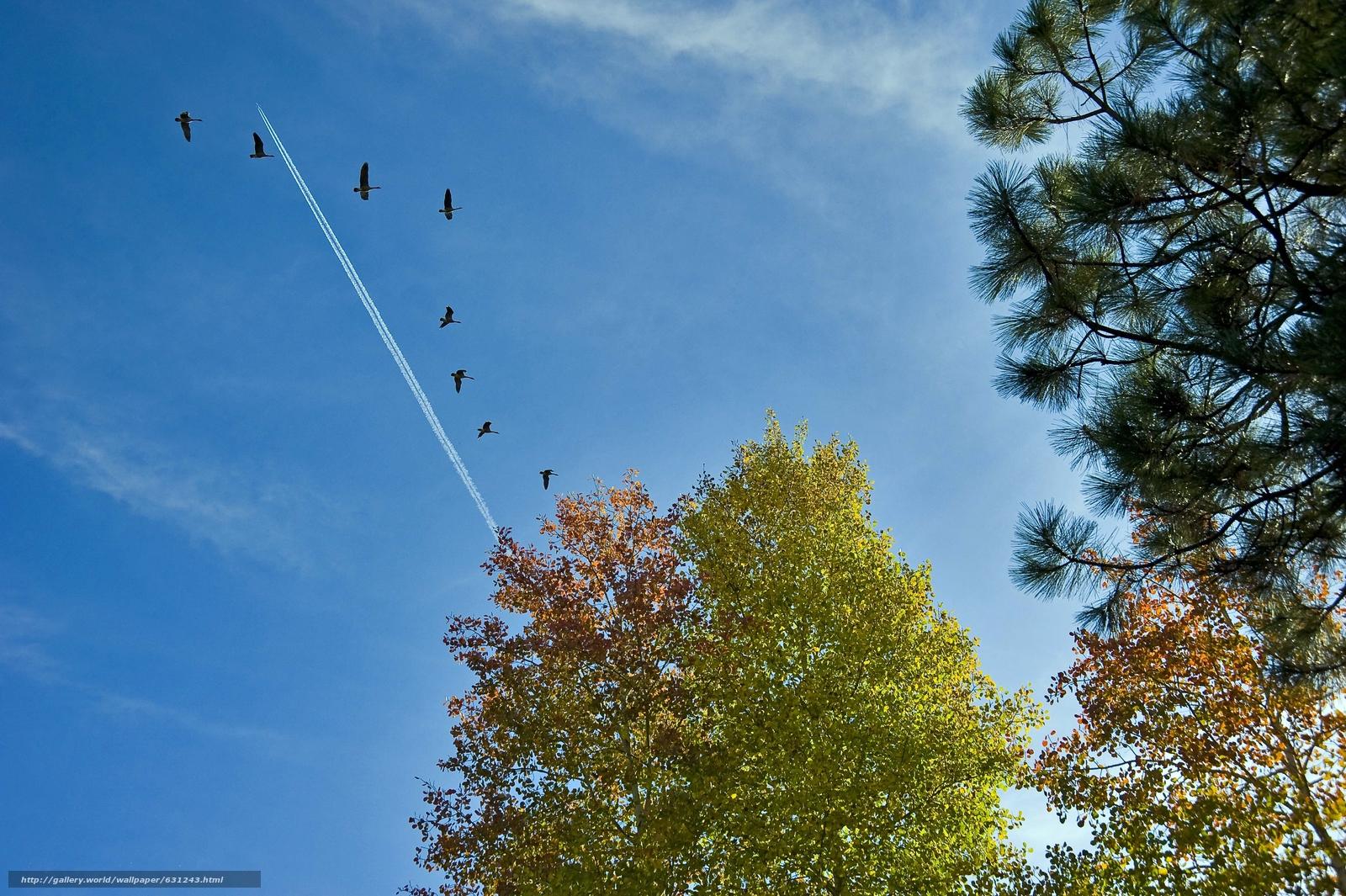 Download wallpaper sky,  trees,  plane,  birds free desktop wallpaper in the resolution 4256x2832 — picture №631243