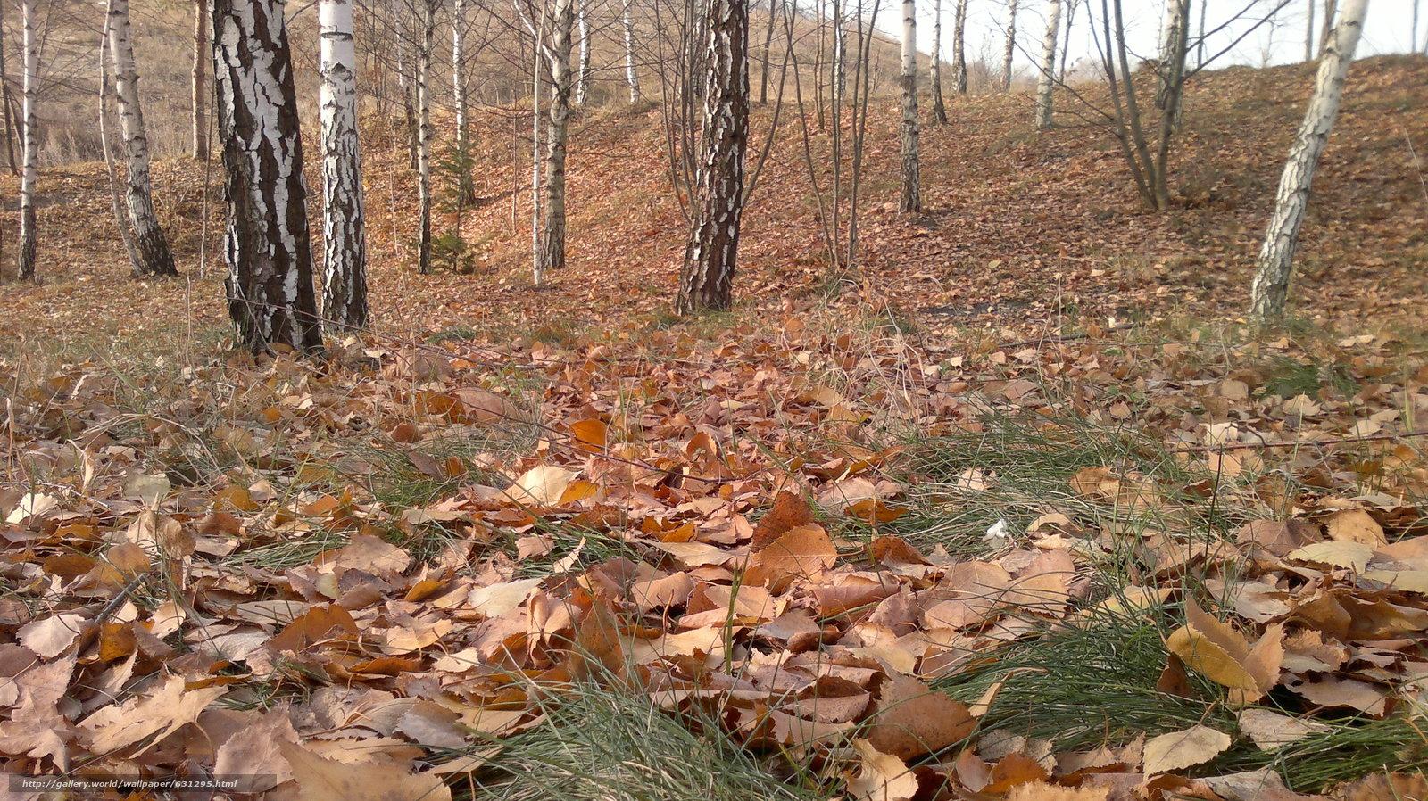 Скачать обои осень,  листья,  пейзаж бесплатно для рабочего стола в разрешении 3264x1832 — картинка №631295
