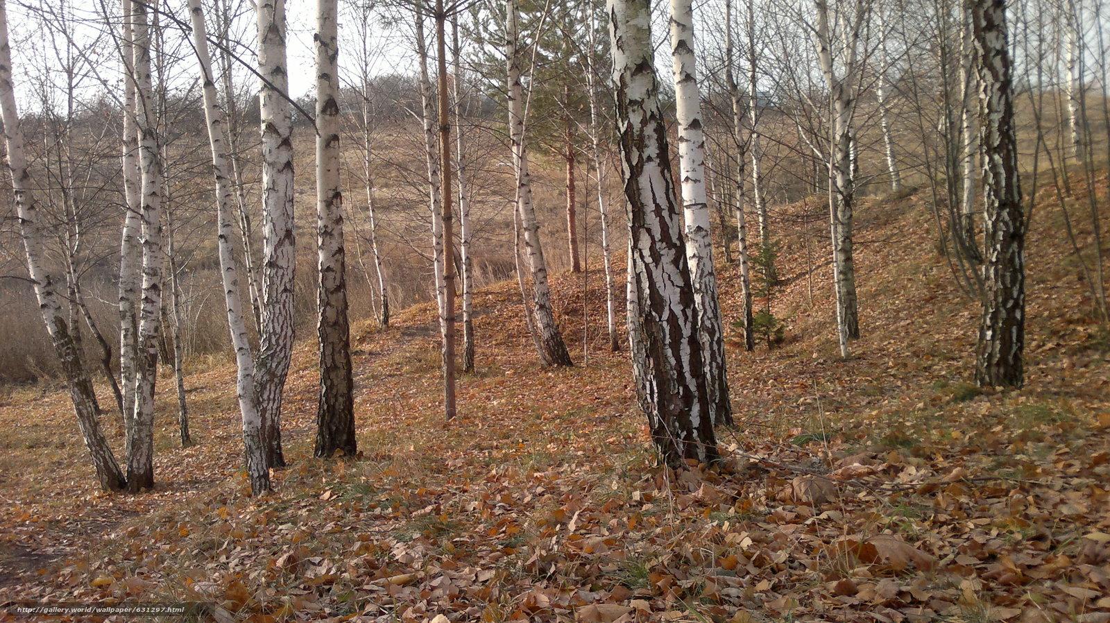 Скачать обои осень,  деревья,  пейзаж бесплатно для рабочего стола в разрешении 3264x1832 — картинка №631297