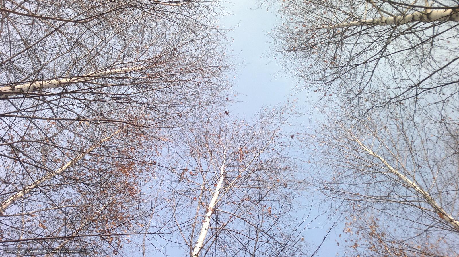 Скачать обои осень,  деревья,  небо бесплатно для рабочего стола в разрешении 3264x1832 — картинка №631298