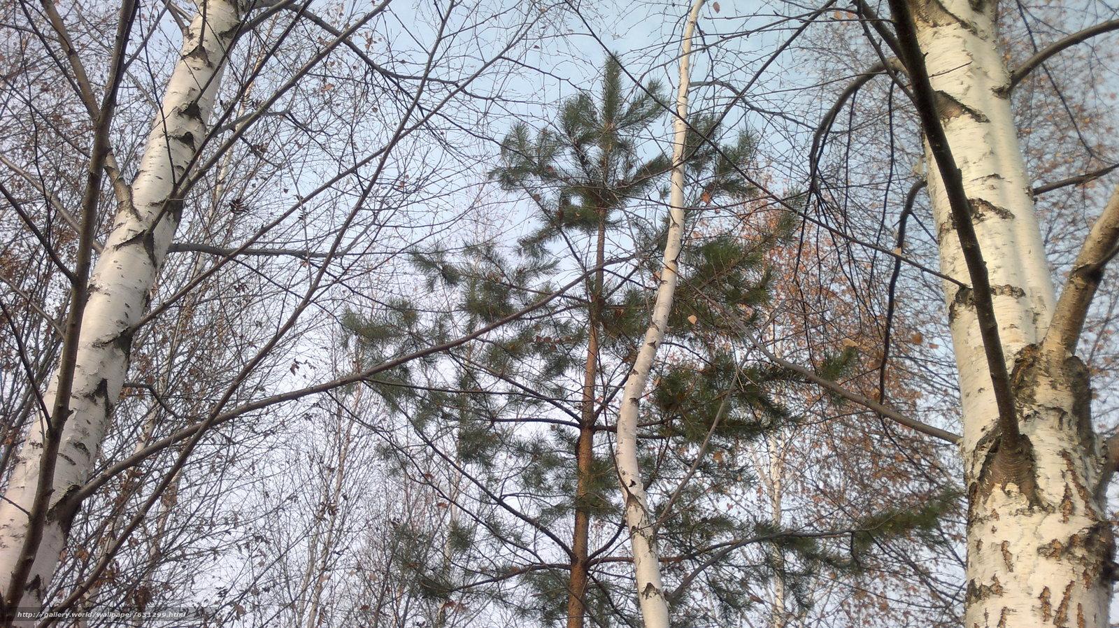 Скачать обои осень,  пейзаж,  сосна бесплатно для рабочего стола в разрешении 3264x1832 — картинка №631299