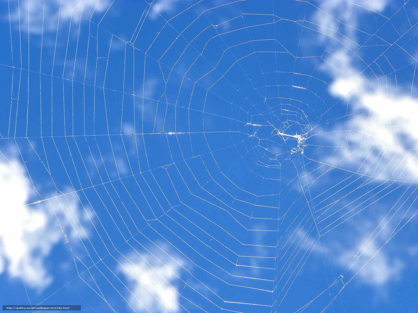 Download wallpaper sky web macro free desktop wallpaper in the resolution 4000x3000 picture - Wallpaper 3000 x 4000 ...