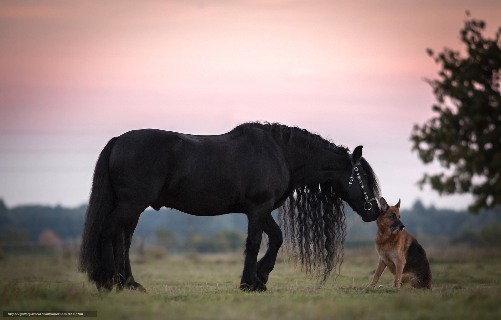 Download wallpaper horse,  raven,  GRIVA,  German shepherd free desktop wallpaper in the resolution 2048x1309 — picture №631927