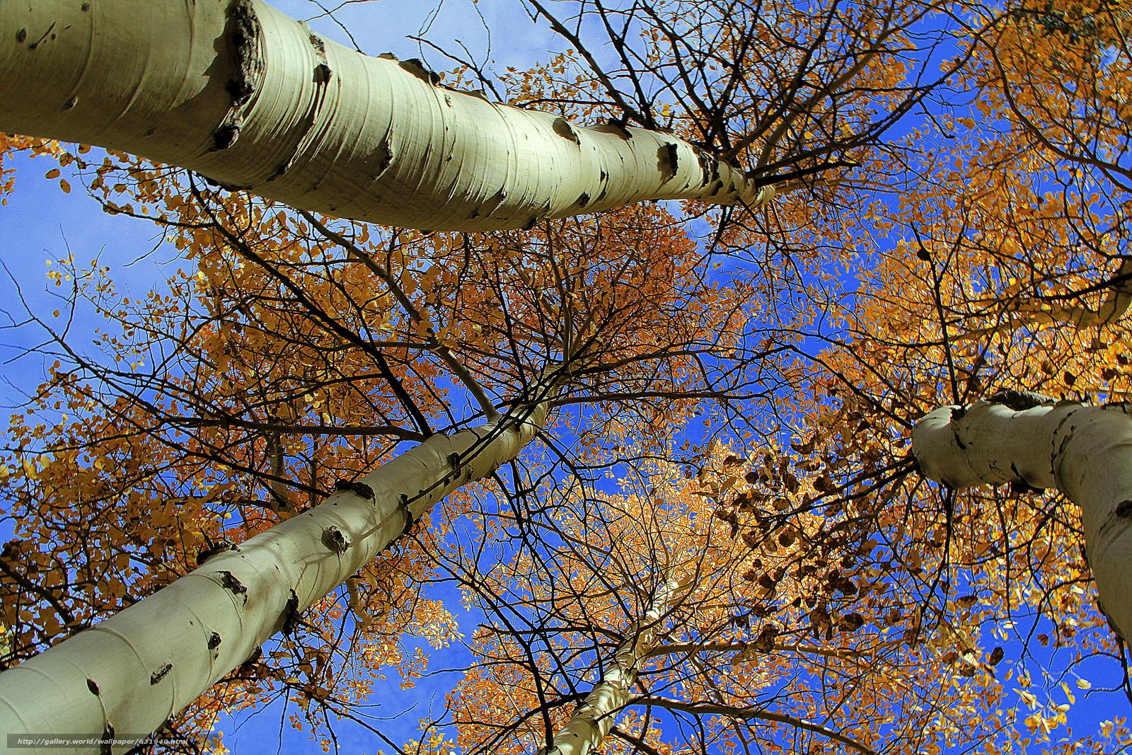 scaricare gli sfondi autunno,  alberi,  incoronare,  natura Sfondi gratis per la risoluzione del desktop 5184x3456 — immagine №631940