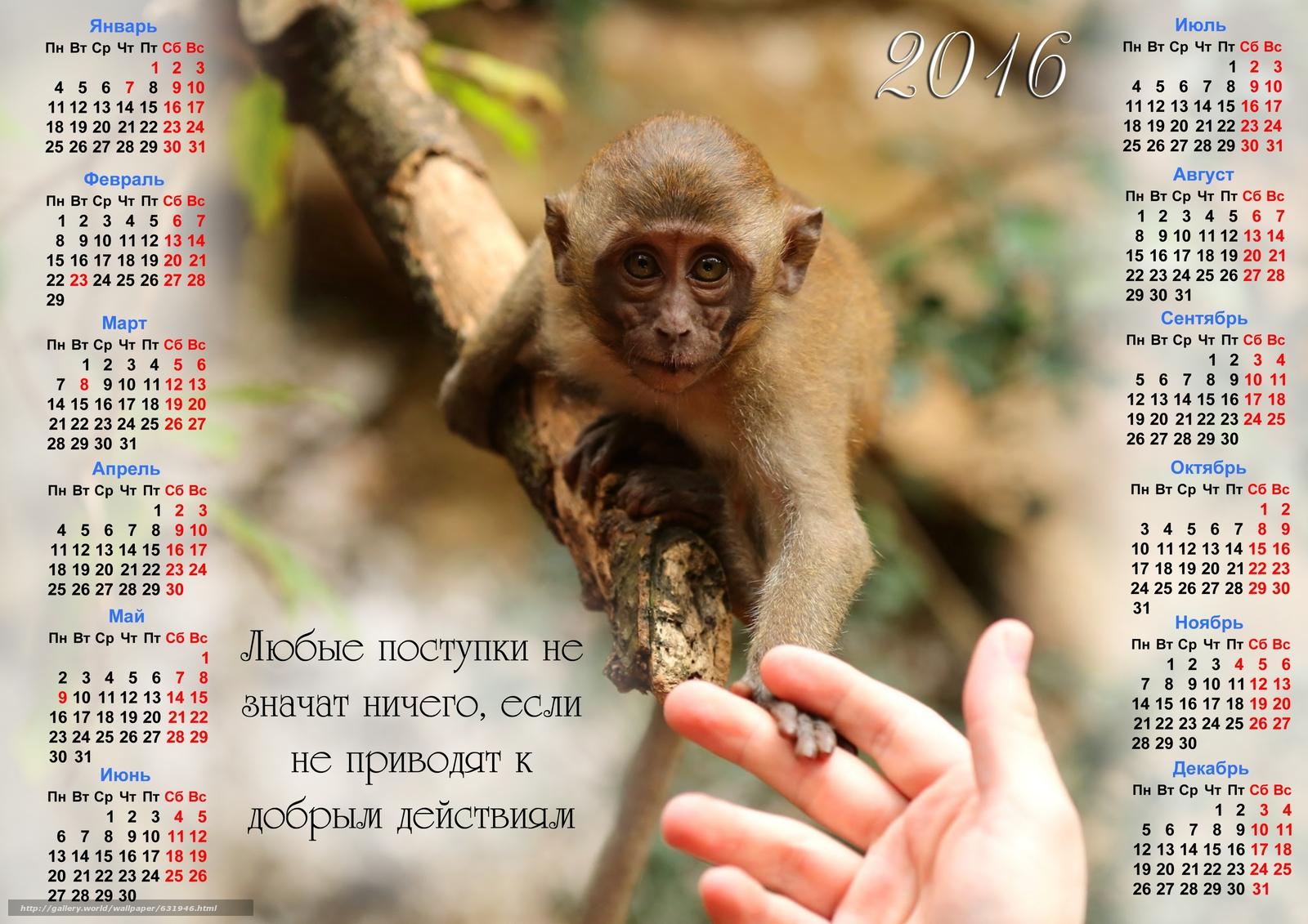 Descargar gratis Calendario de las buenas obras,  mono,  Símbolo del mono 2016,  Calendario 2016 Fondos de escritorio en la resolucin 3508x2480 — imagen №631946