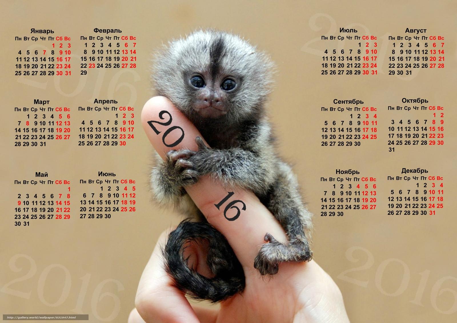 Descargar gratis Calendario dedo mono,  mono,  Símbolo del mono 2016,  Calendario 2016 Fondos de escritorio en la resolucin 3508x2480 — imagen №631947