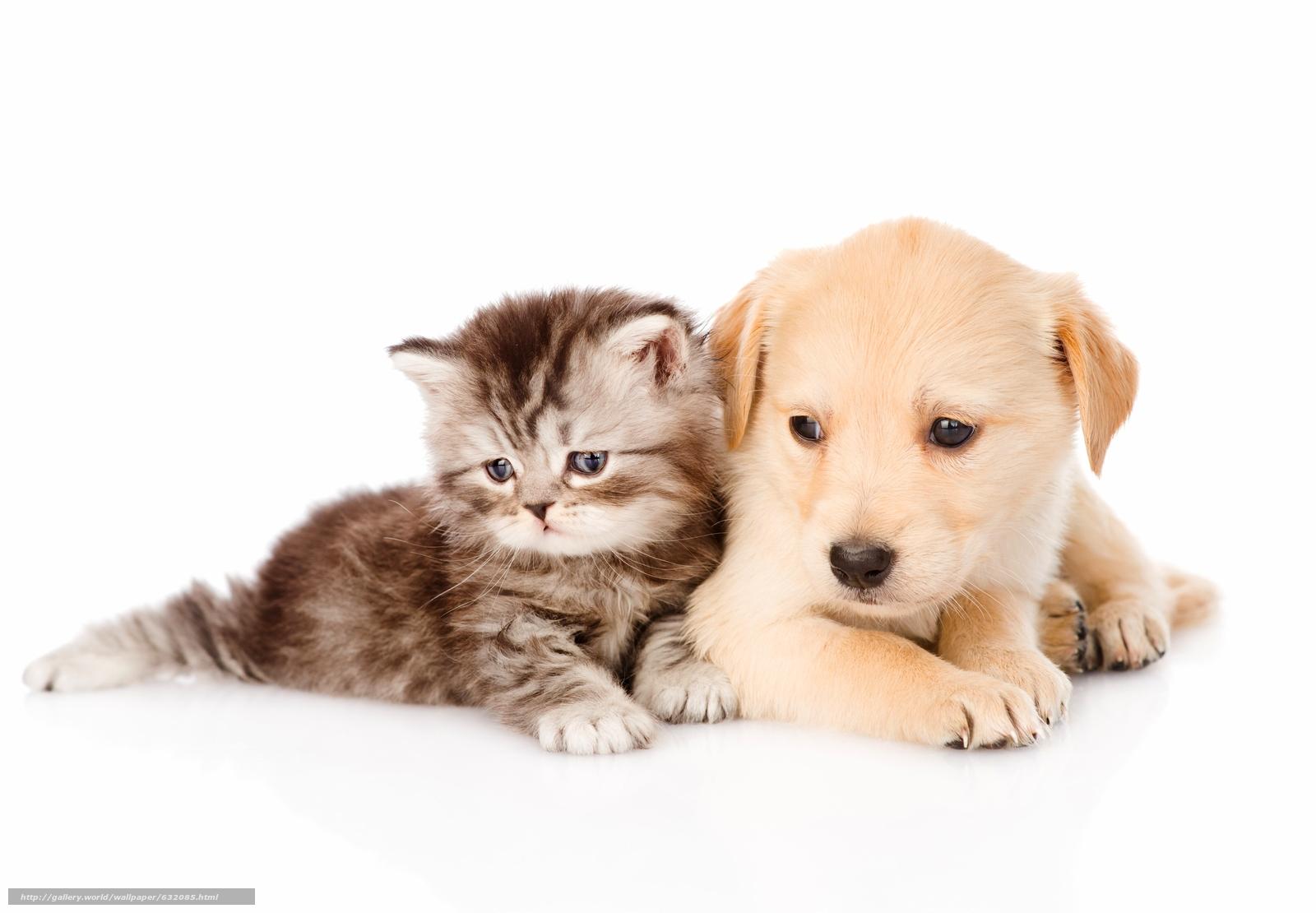 scaricare gli sfondi cane,  cucciolo,  gattino,  Amici Sfondi gratis per la risoluzione del desktop 6256x4341 — immagine №632085