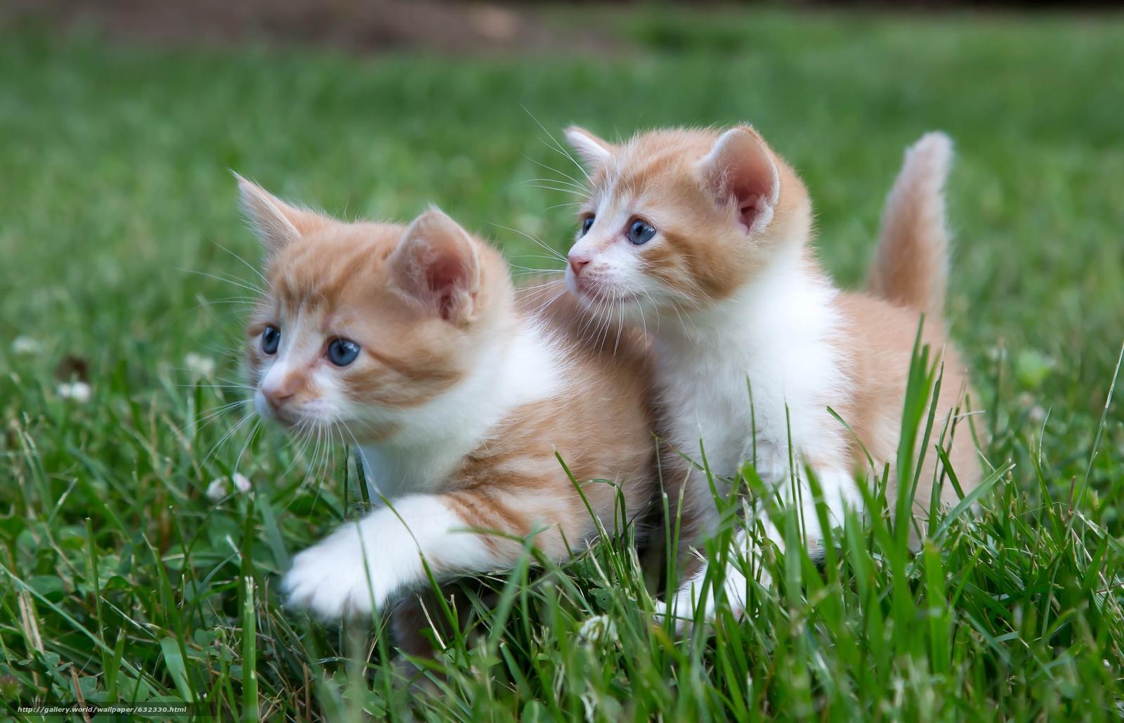 Скачать обои котята,  малыши,  парочка,  двойняшки бесплатно для рабочего стола в разрешении 4822x3101 — картинка №632330