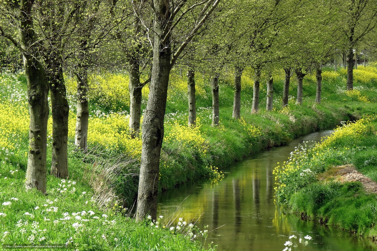 Download wallpaper small river,  trees,  Flowers,  nature free desktop wallpaper in the resolution 2000x1332 — picture №632596