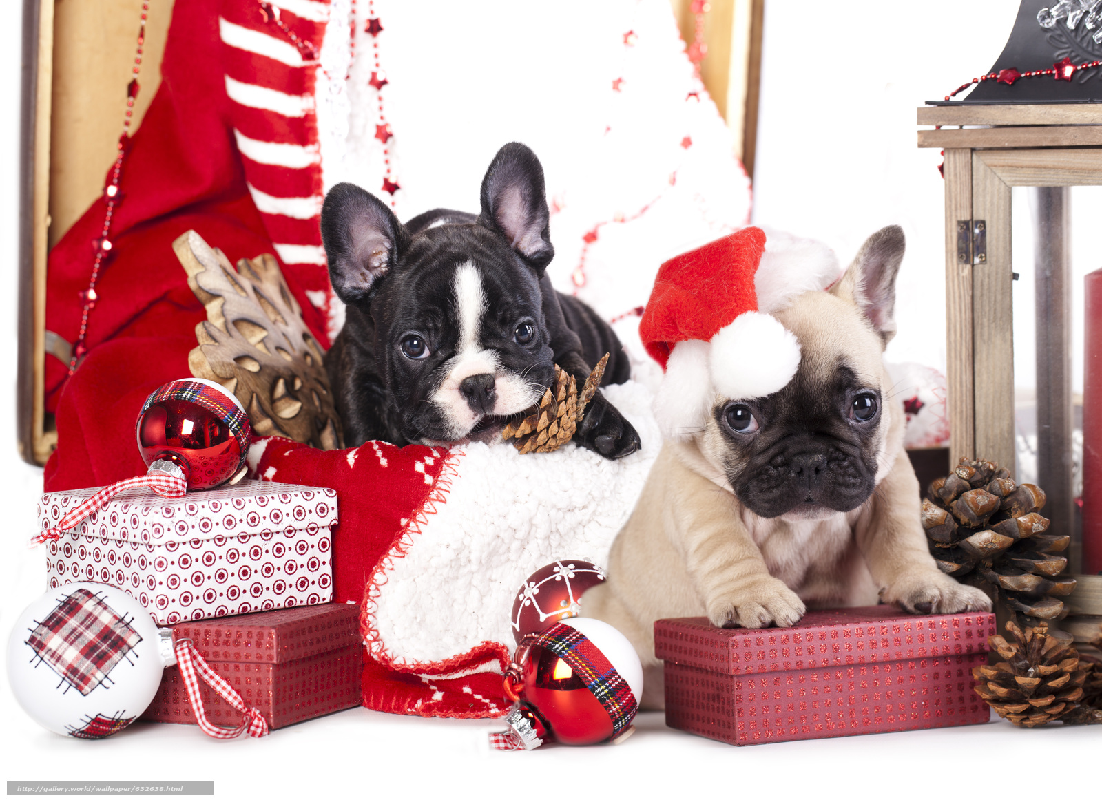 Download wallpaper New Year,  French Bulldog,  Dog,  Puppies free desktop wallpaper in the resolution 5142x3744 — picture №632638