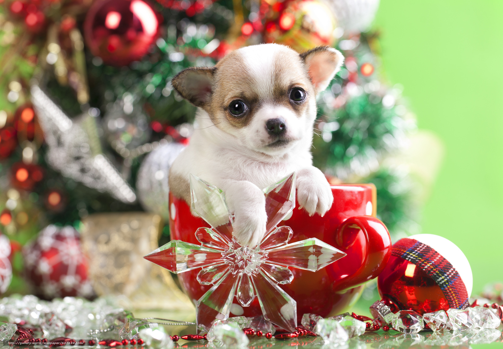 Download wallpaper New Year,  Chihuahua,  dog,  puppy free desktop wallpaper in the resolution 5052x3510 — picture №632639