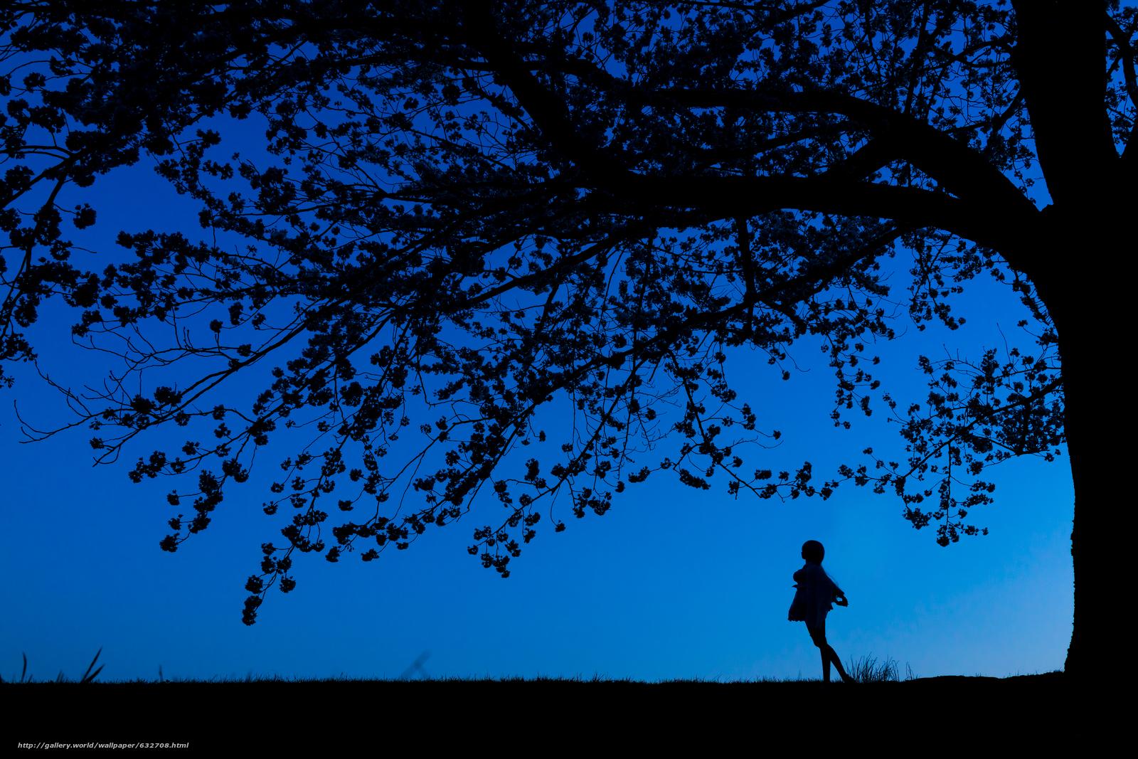 Descargar gratis noche,  siluetas,  árbol,  chica Fondos de escritorio en la resolucin 6000x4000 — imagen №632708