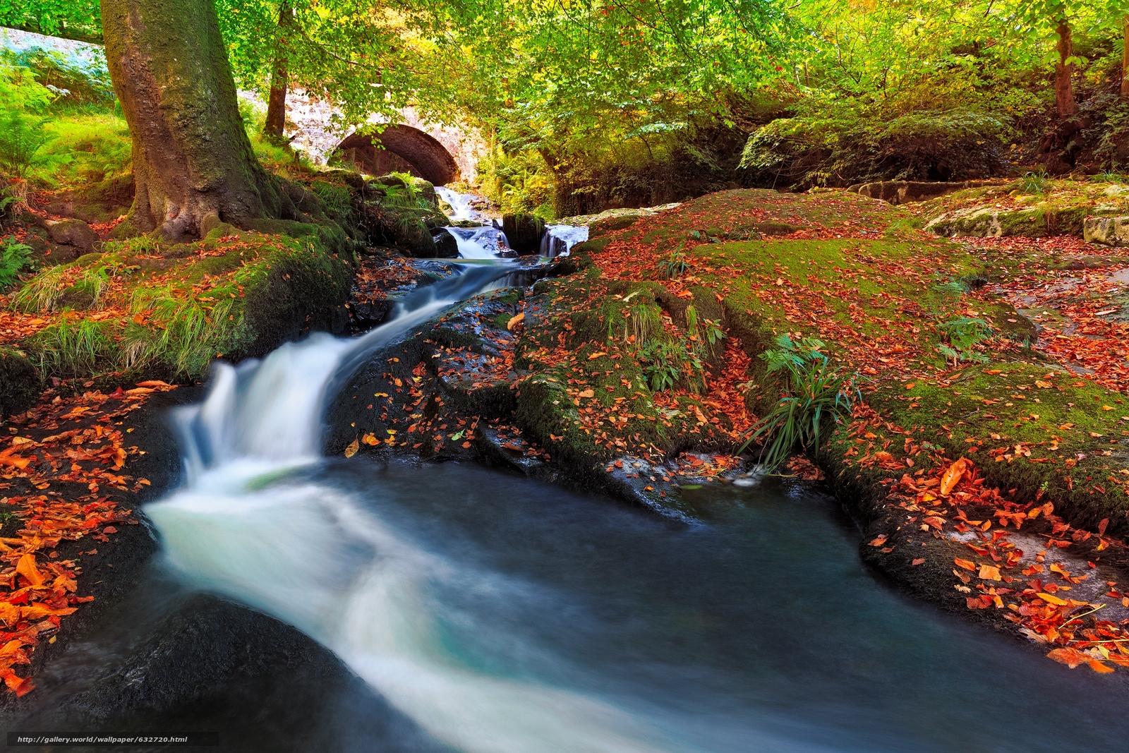 Descargar gratis otoño,  rkchka,  árboles,  puente Fondos de escritorio en la resolucin 2400x1600 — imagen №632720