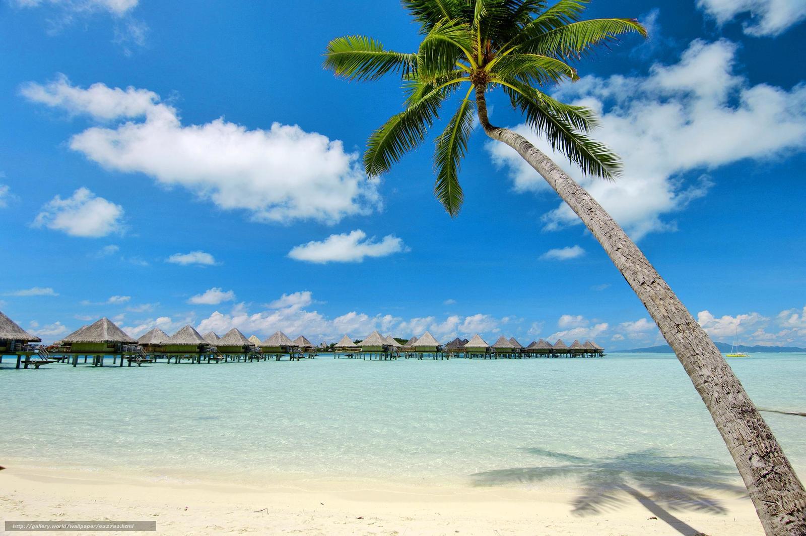 Download Wallpaper Bora Bora Polinesia Sea Palm Free Desktop