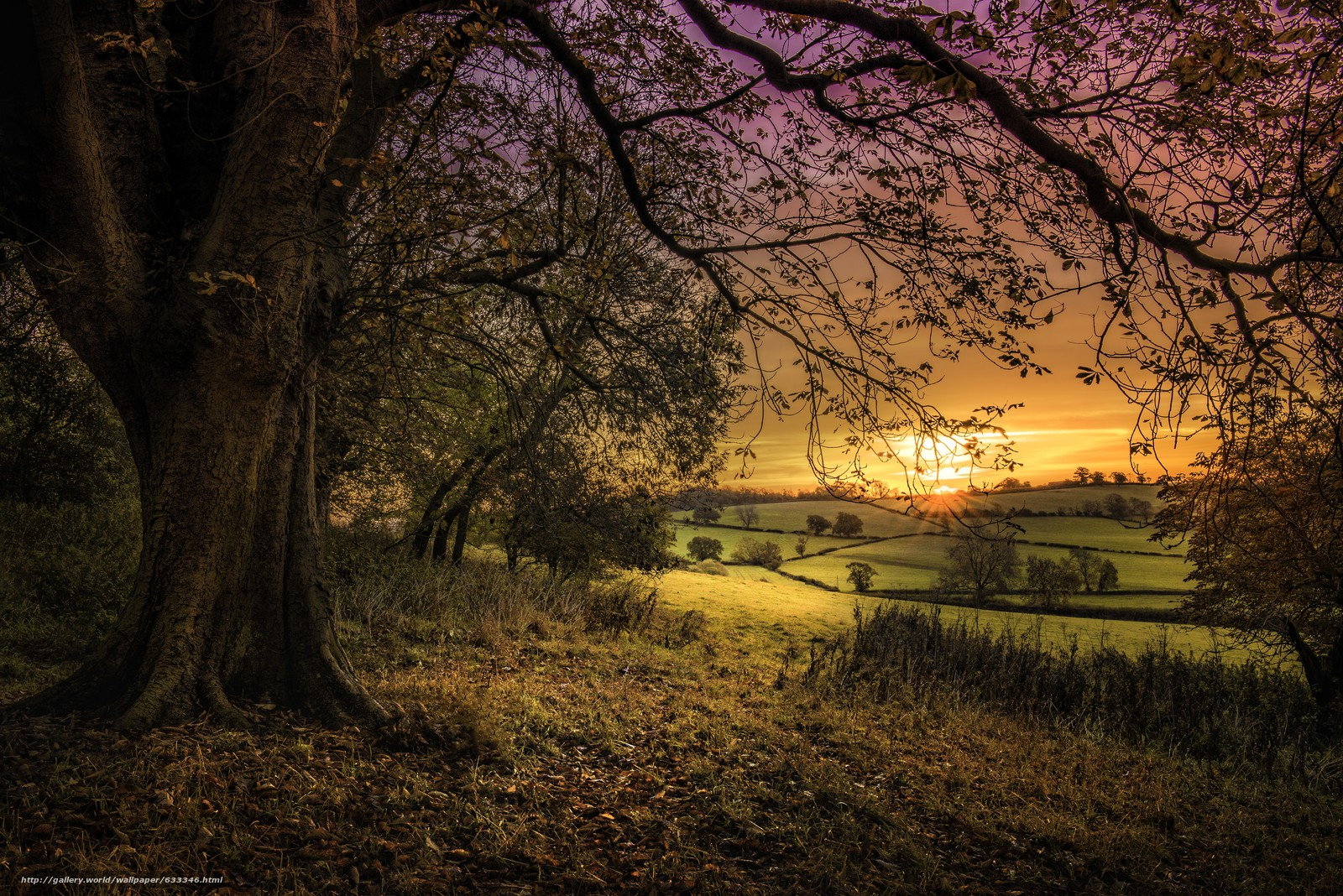 下载壁纸 美丽的夕阳,  场,  树,  景观 免费为您的桌面分辨率的壁纸 7360x4912 — 图片 №633346