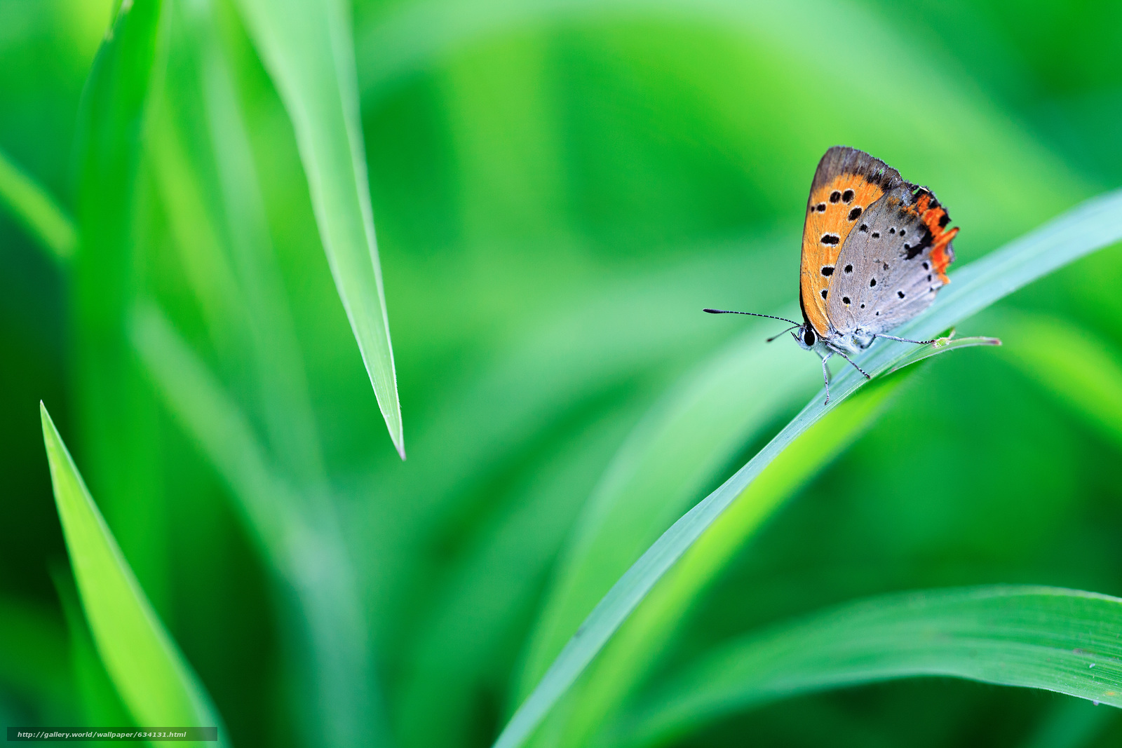Descargar gratis mariposa,  hierba,  Macro Fondos de escritorio en la resolucin 5616x3744 — imagen №634131