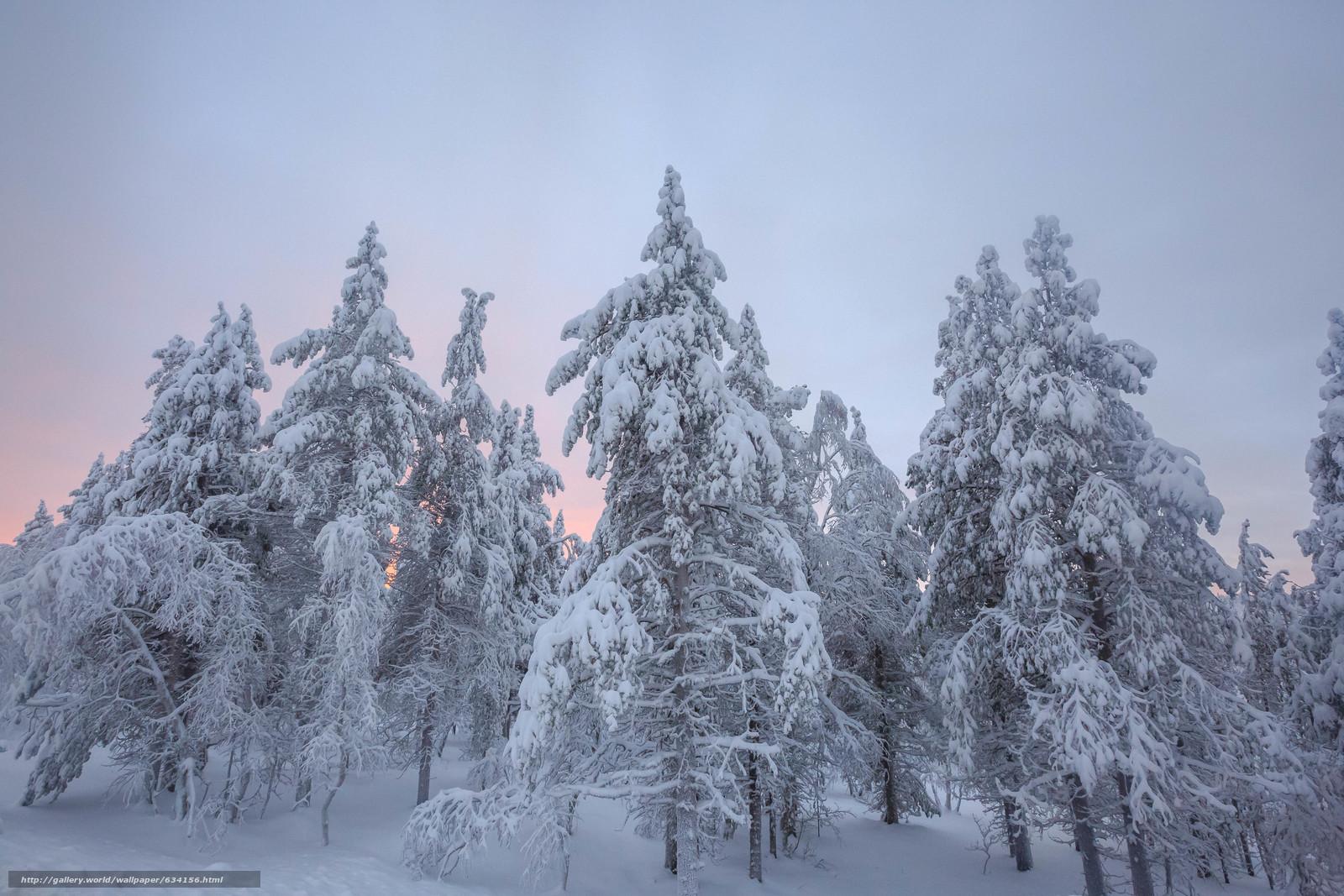Tlcharger Fond d'ecran hiver,  coucher du soleil,  neige,  arbres Fonds d'ecran gratuits pour votre rsolution du bureau 5760x3840 — image №634156