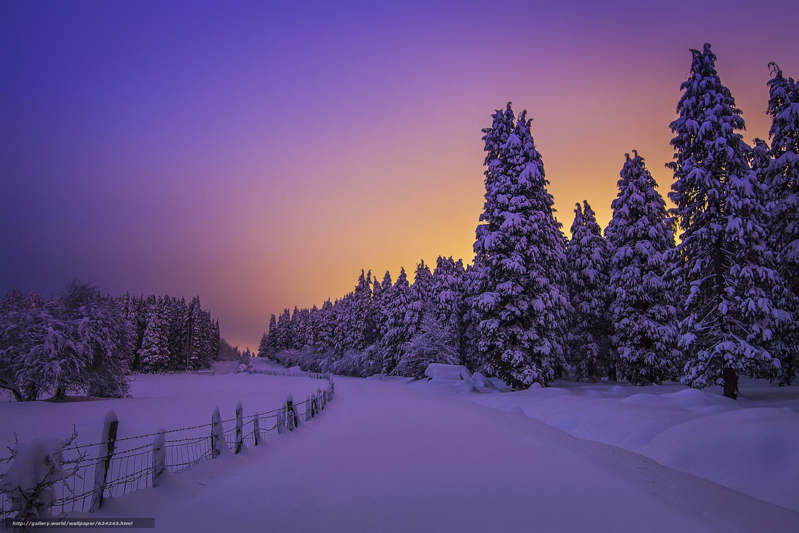 Tlcharger Fond d'ecran Snowy Night Lights,  Forêt Otzarreta,  Pays Basque,  Espagne Fonds d'ecran gratuits pour votre rsolution du bureau 4962x3308 — image №634243