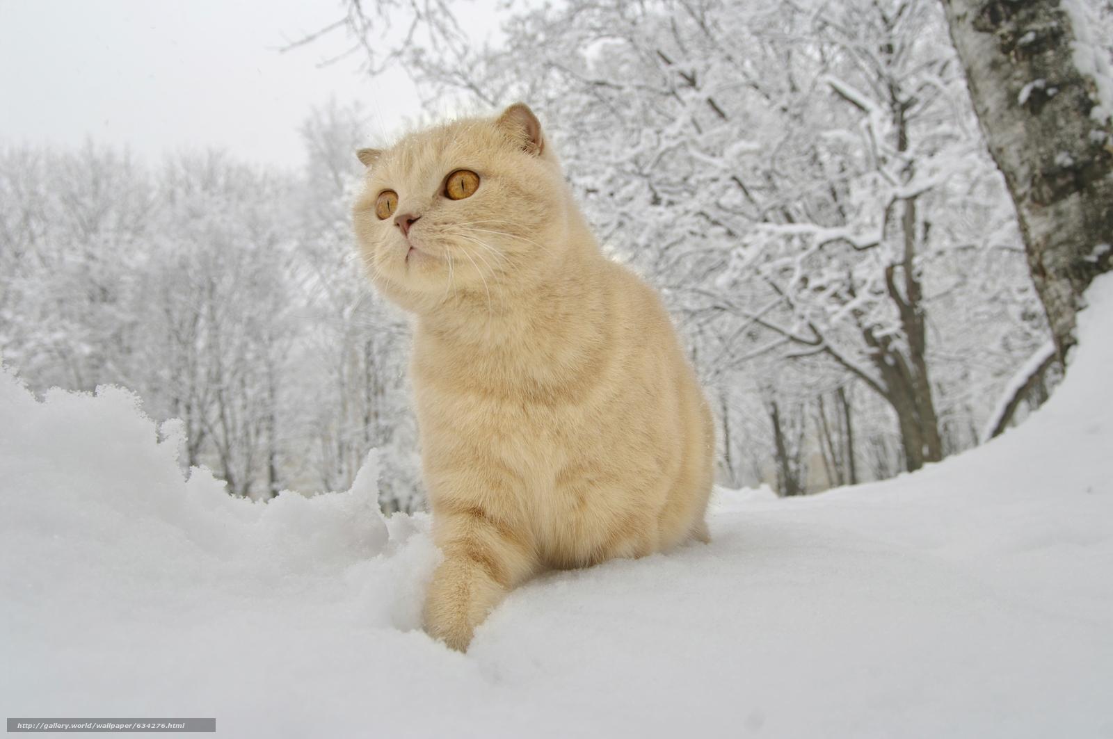 下载壁纸 猫,  冬天,  雪 免费为您的桌面分辨率的壁纸 4672x3104 — 图片 №634276