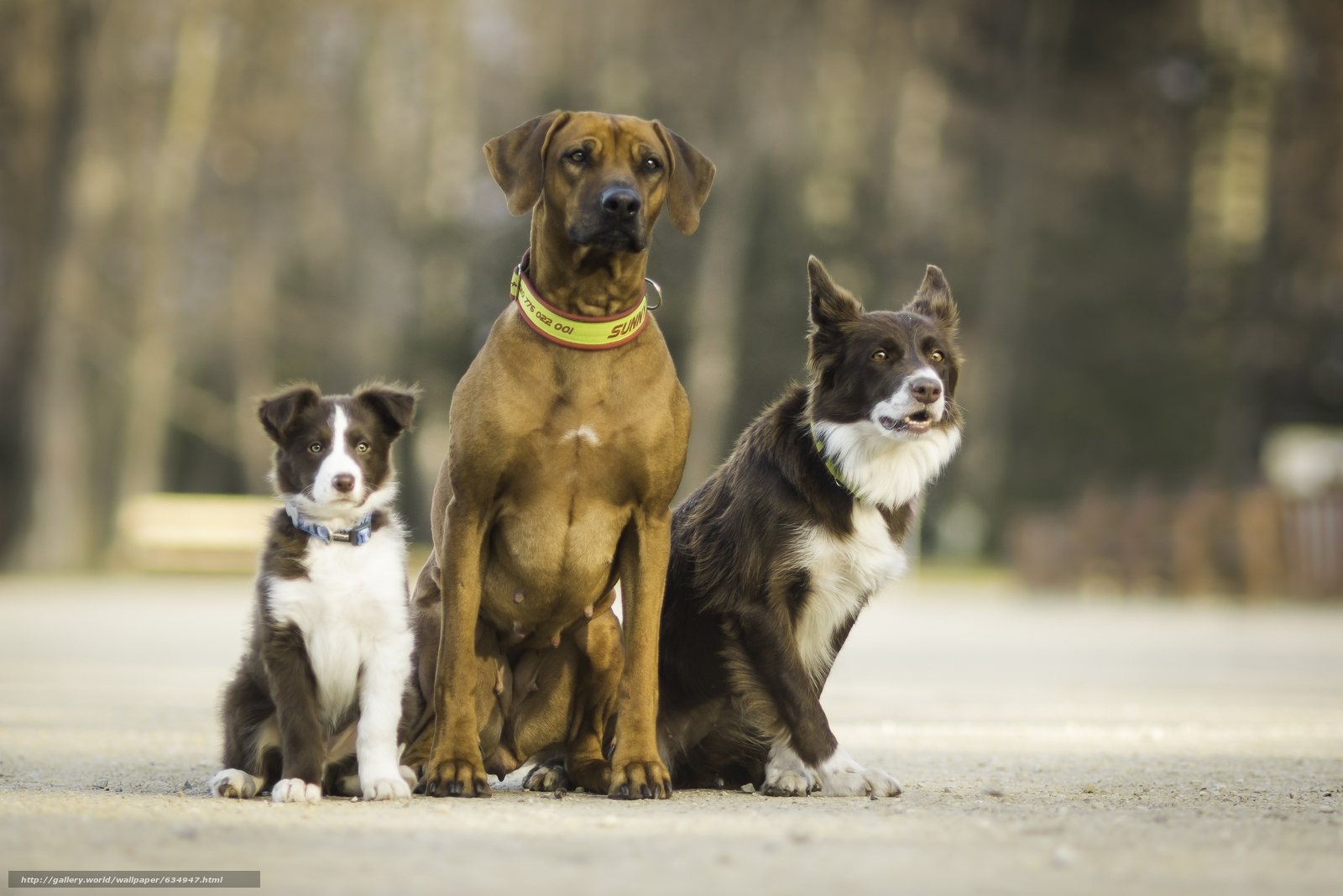 Download wallpaper Dog,  trio,  Trinity,  Friends free desktop wallpaper in the resolution 3600x2400 — picture №634947