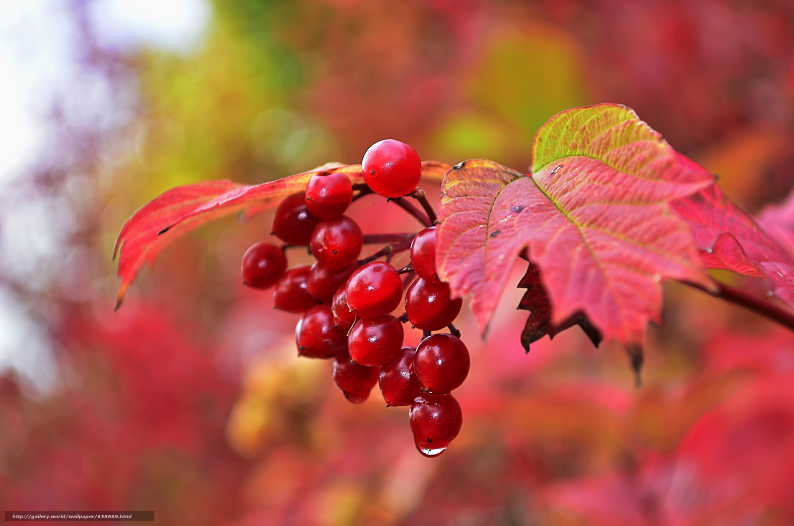 Download wallpaper autumn,  branch,  BERRY,  foliage free desktop wallpaper in the resolution 4928x3264 — picture №635669
