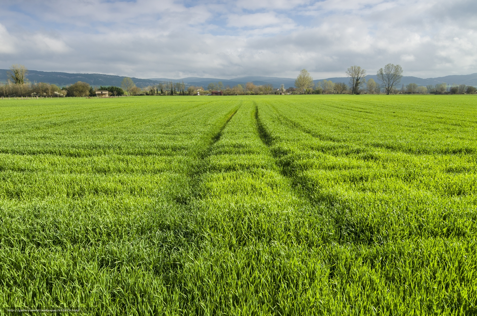 Download wallpaper field,  grass,  HORIZON,  landscape free desktop wallpaper in the resolution 4928x3264 — picture №635670