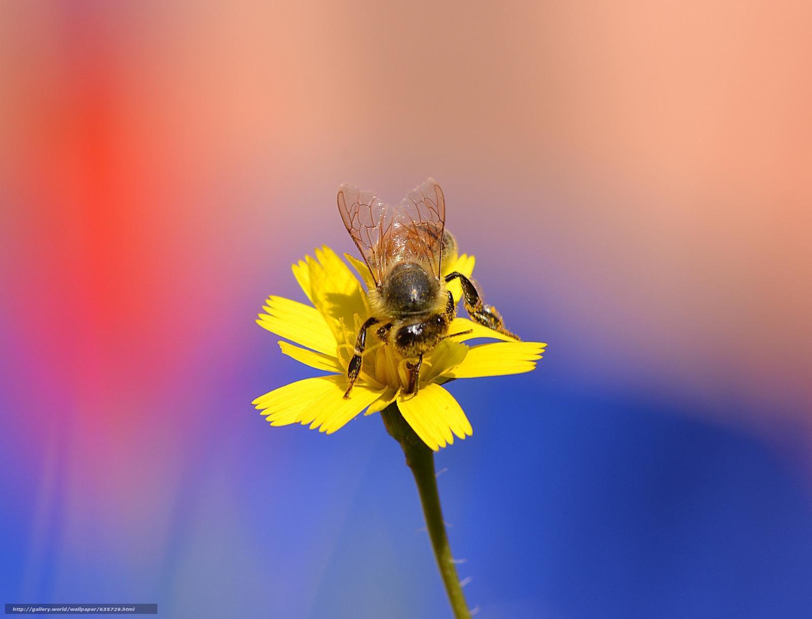 下载壁纸 花,  蜜蜂,  宏 免费为您的桌面分辨率的壁纸 3486x2658 — 图片 №635729