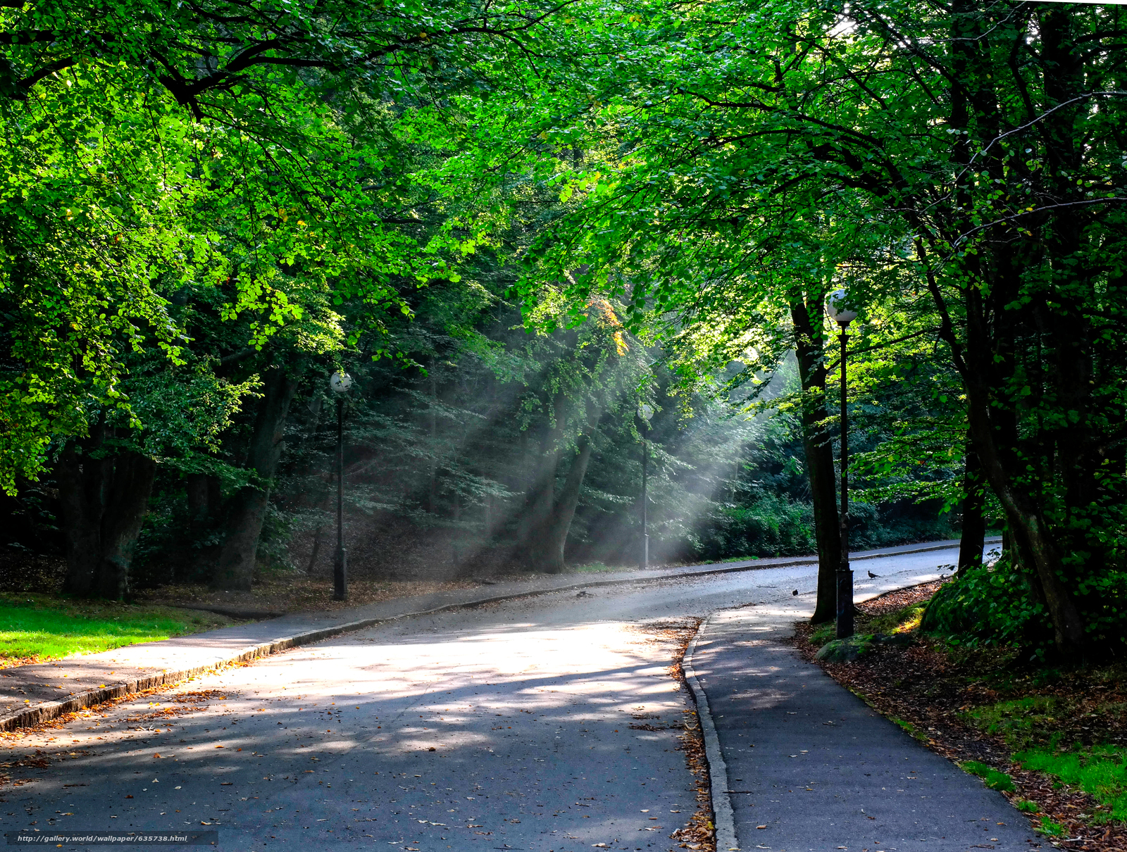 下载壁纸 森林,  树,  道路,  景观 免费为您的桌面分辨率的壁纸 4572x3458 — 图片 №635738