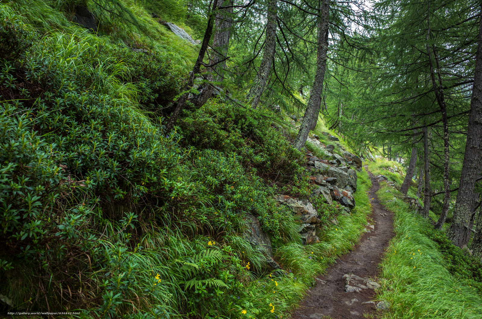 Download wallpaper forest,  trees,  footpath,  nature free desktop wallpaper in the resolution 4928x3264 — picture №636442
