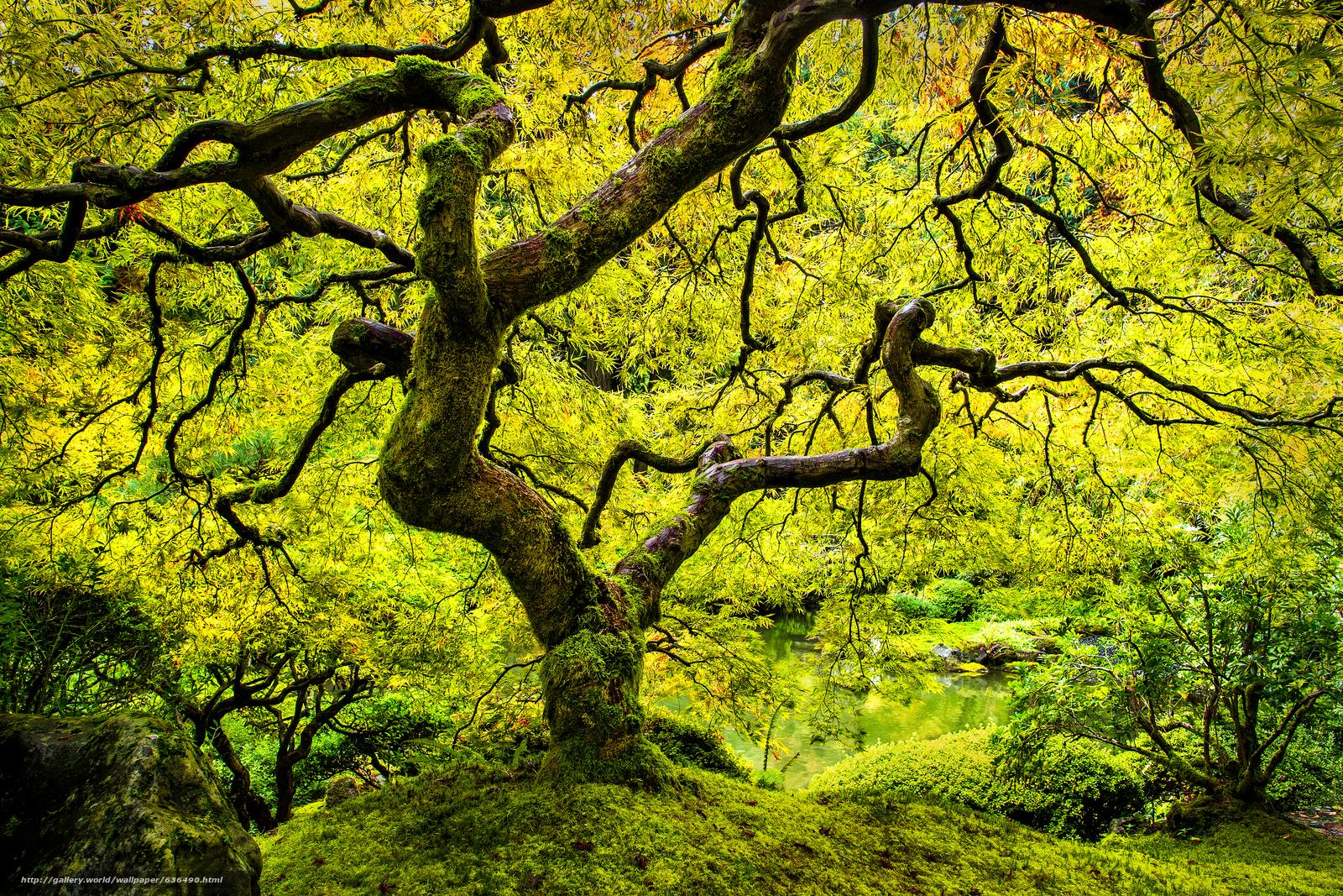 壁紙をダウンロード 日本庭園,  ツリー,  秋,  自然 デスクトップの解像度のための無料壁紙 4608x3072 — 絵 №636490