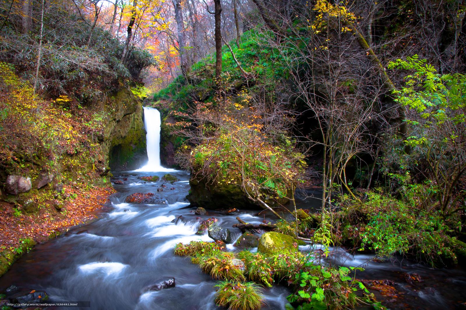 Скачать обои лес,  деревья,  осень,  водопад бесплатно для рабочего стола в разрешении 2560x1700 — картинка №636491