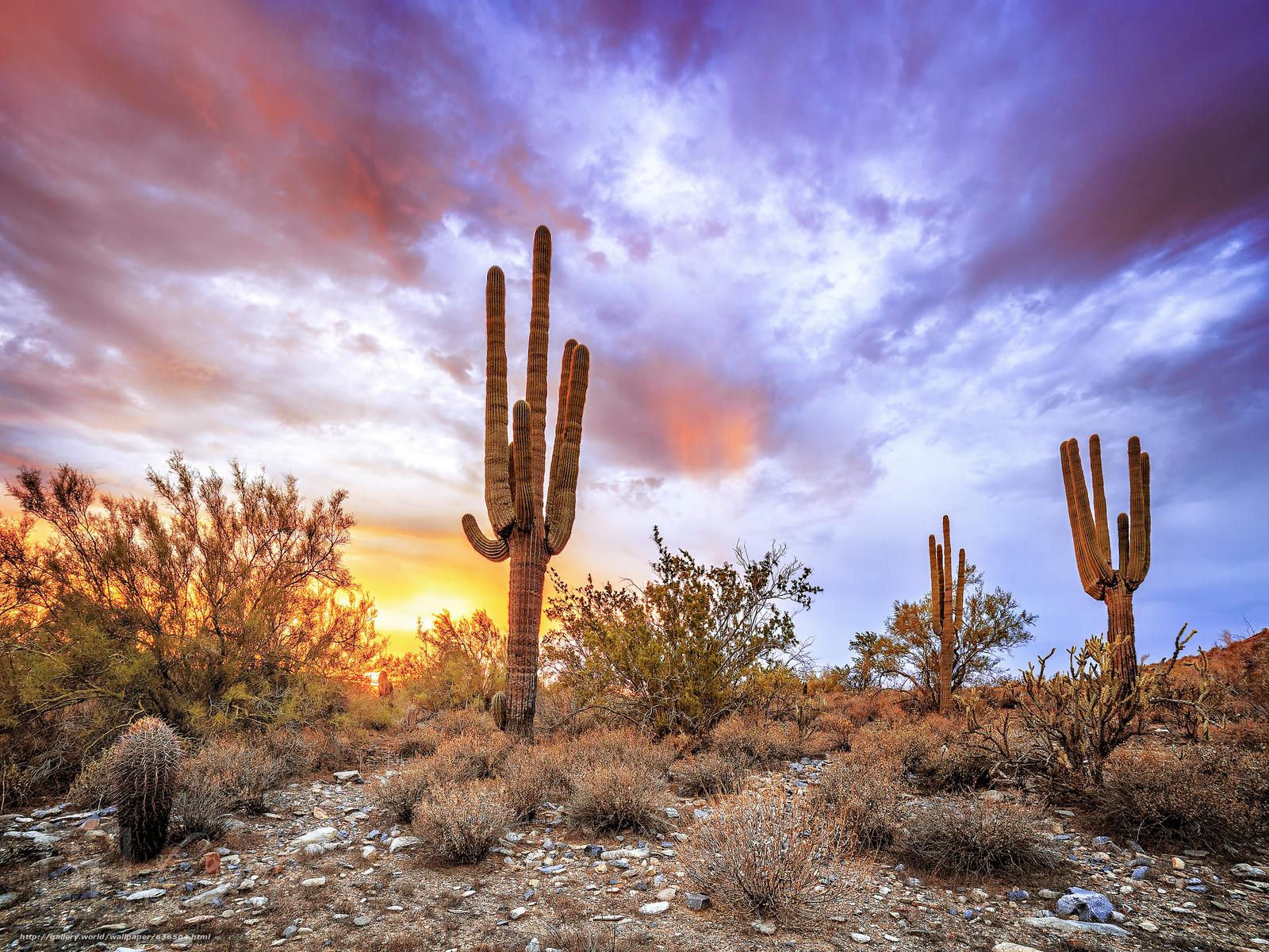 Скачать обои закат,  пустыня Сонора,  штат Аризона,  пейзаж бесплатно для рабочего стола в разрешении 2048x1536 — картинка №636504