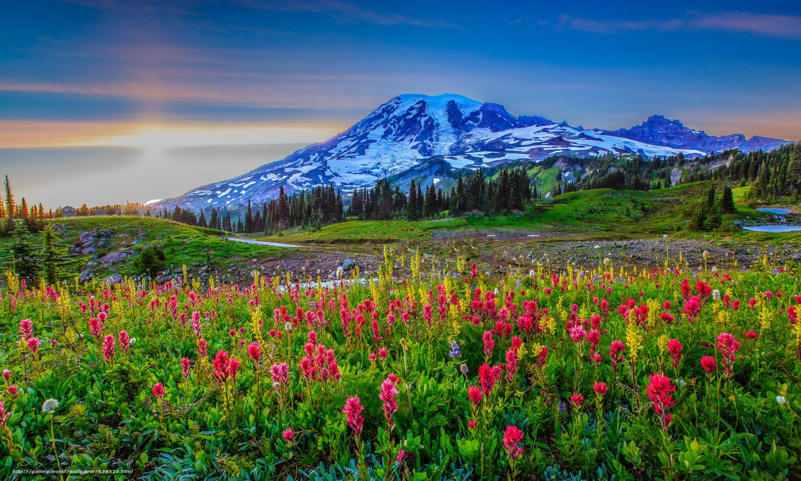 下载壁纸 日落,  山,  丘陵,  花卉 免费为您的桌面分辨率的壁纸 2048x1230 — 图片 №636510