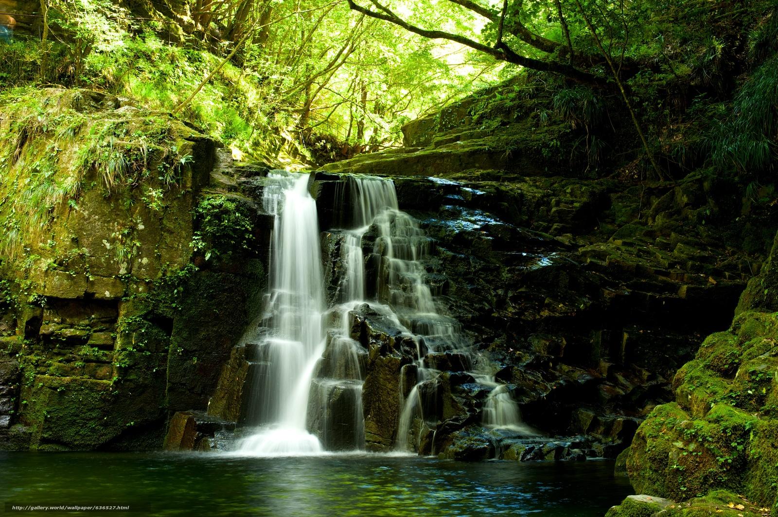 下载壁纸 森林,  树,  岩石,  瀑布 免费为您的桌面分辨率的壁纸 4256x2832 — 图片 №636527
