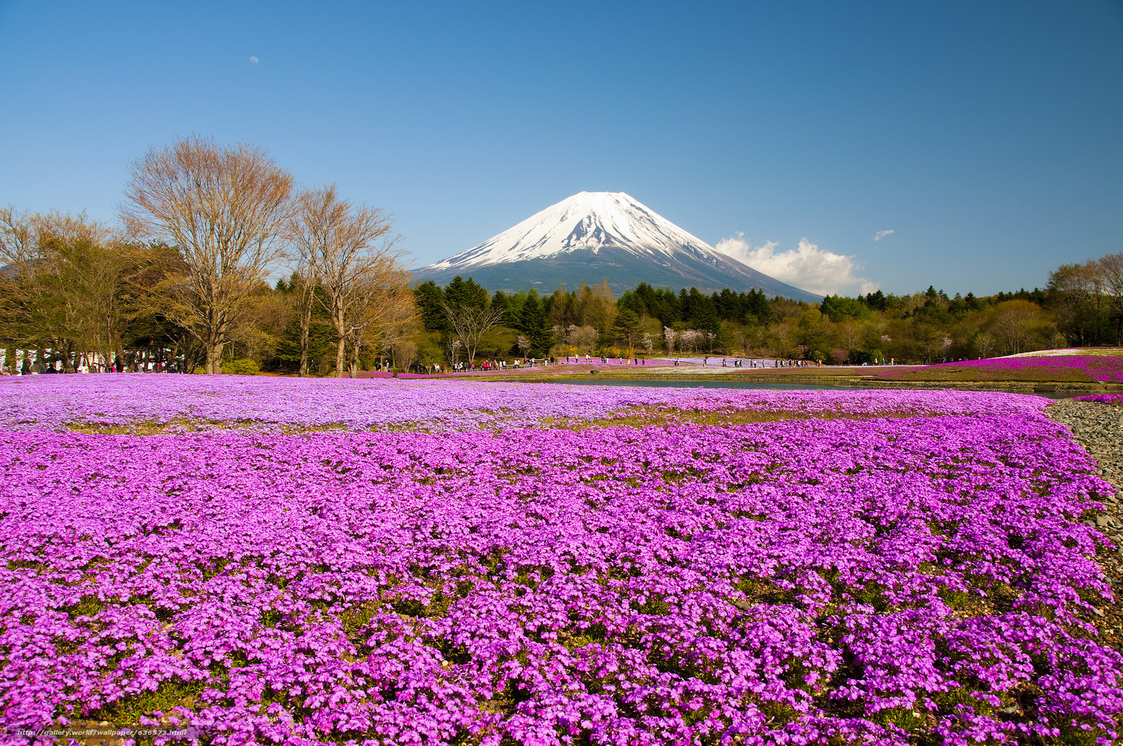 Download wallpaper Mount Fuji,  Located on the island of Honshu,  the highest mountain in Japan,  phlox Festival free desktop wallpaper in the resolution 2048x1360 — picture №636573