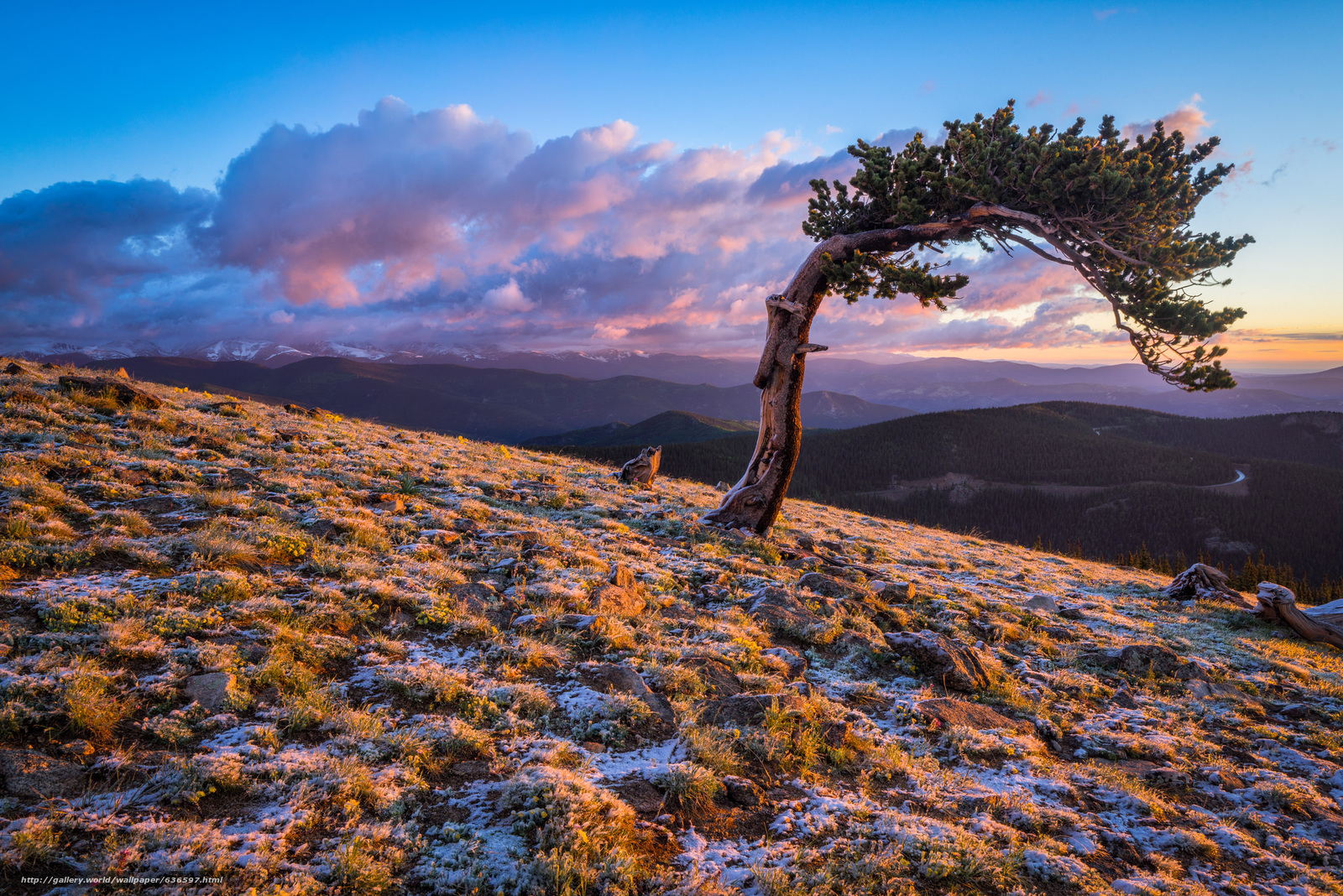 Tlcharger Fond d'ecran pin,  Colorado,  coucher du soleil,  paysage Fonds d'ecran gratuits pour votre rsolution du bureau 2048x1367 — image №636597