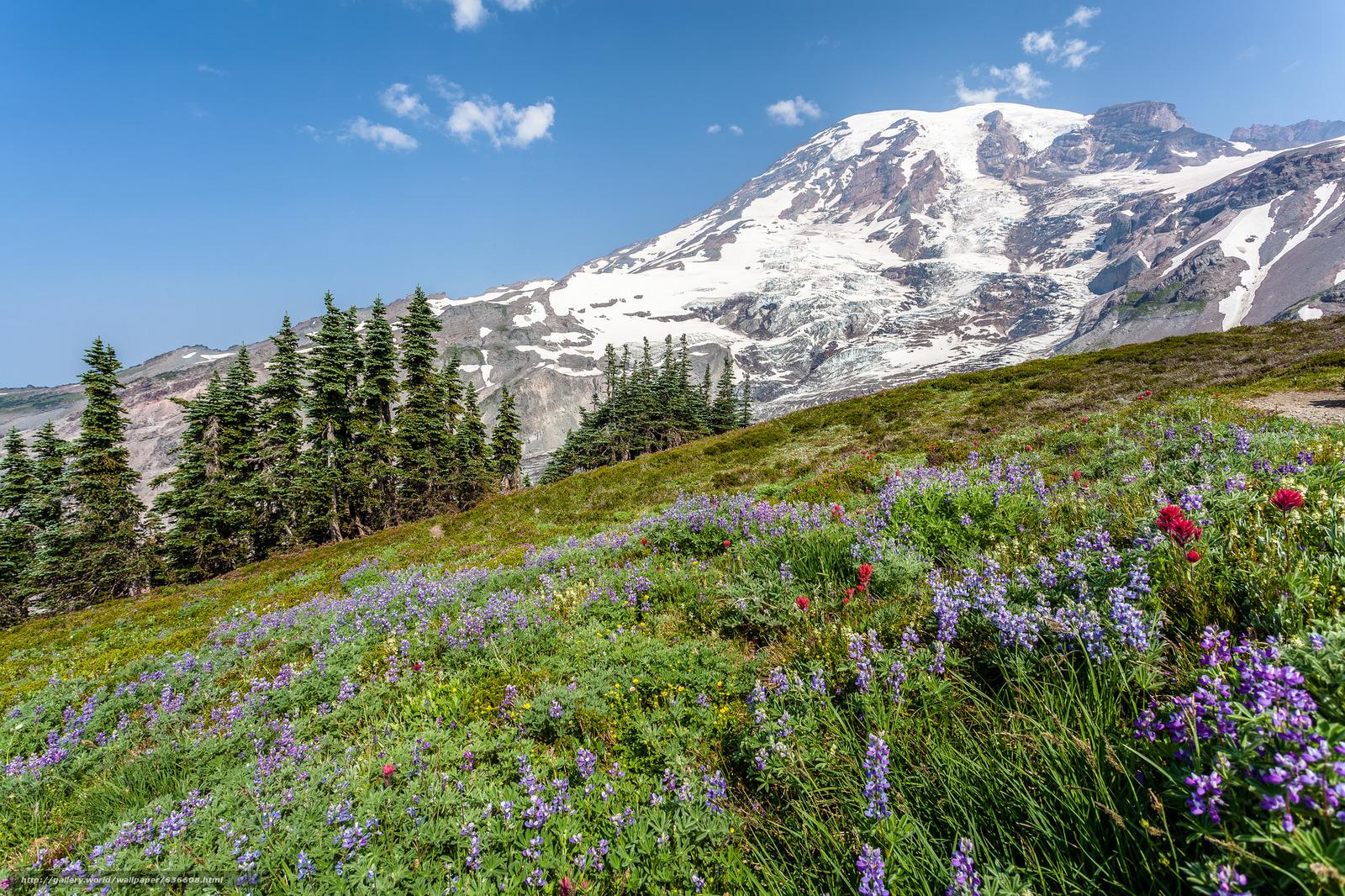 scaricare gli sfondi Mount Rainier National Park,  Parchi Nazionali,  Washington,  Montagne Sfondi gratis per la risoluzione del desktop 2048x1365 — immagine №636608