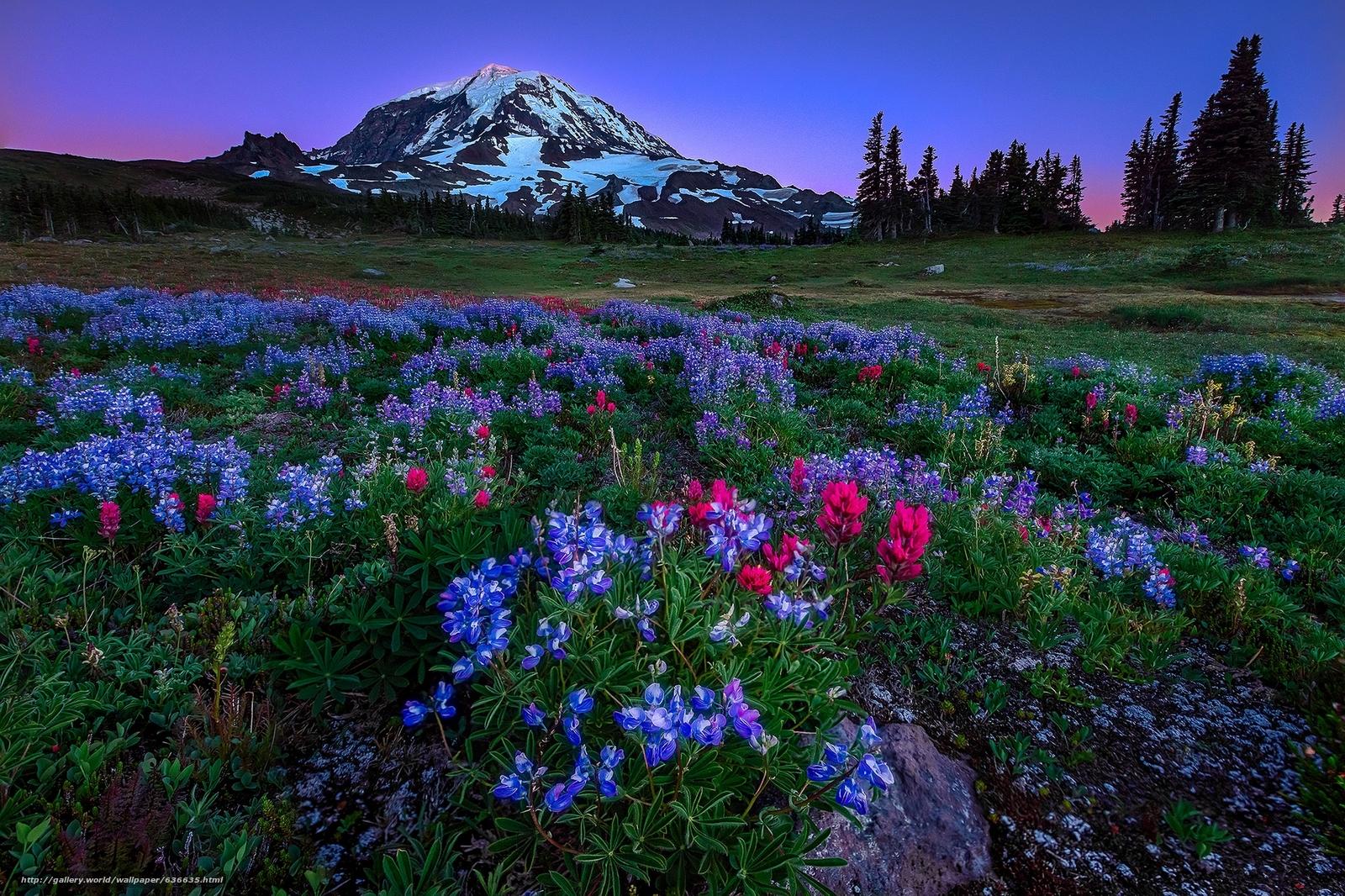 Скачать обои Mount Rainier National Park,  национальный парк США,  Вашингтон,  горы бесплатно для рабочего стола в разрешении 2048x1365 — картинка №636635