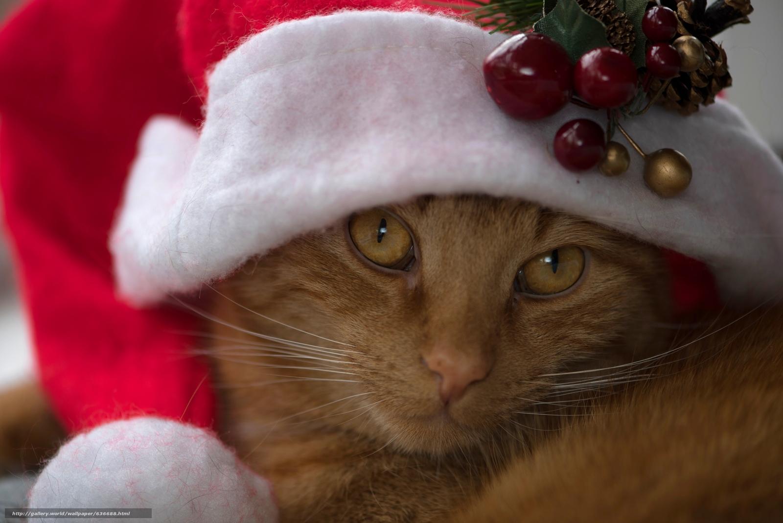 scaricare gli sfondi gatto,  COTE,  Red,  museruola Sfondi gratis per la risoluzione del desktop 5400x3605 — immagine №636688