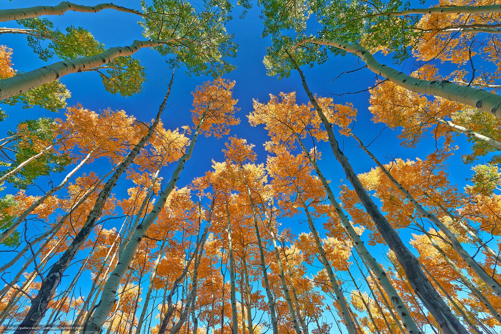 scaricare gli sfondi autunno,  alberi,  incoronare,  superiore Sfondi gratis per la risoluzione del desktop 2048x1367 — immagine №636827