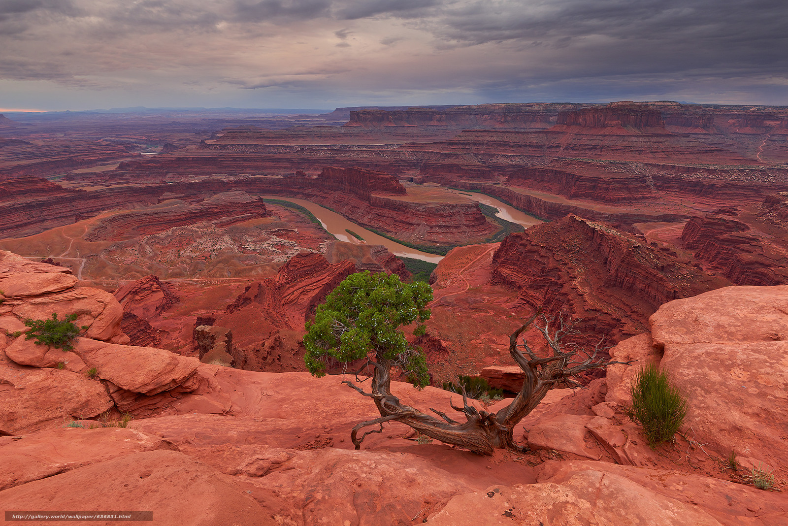 Download Wallpaper Dead Horse Point State Parkgory Rocks Tree Free Desktop In The Resolution 2048x1367 Picture No636831